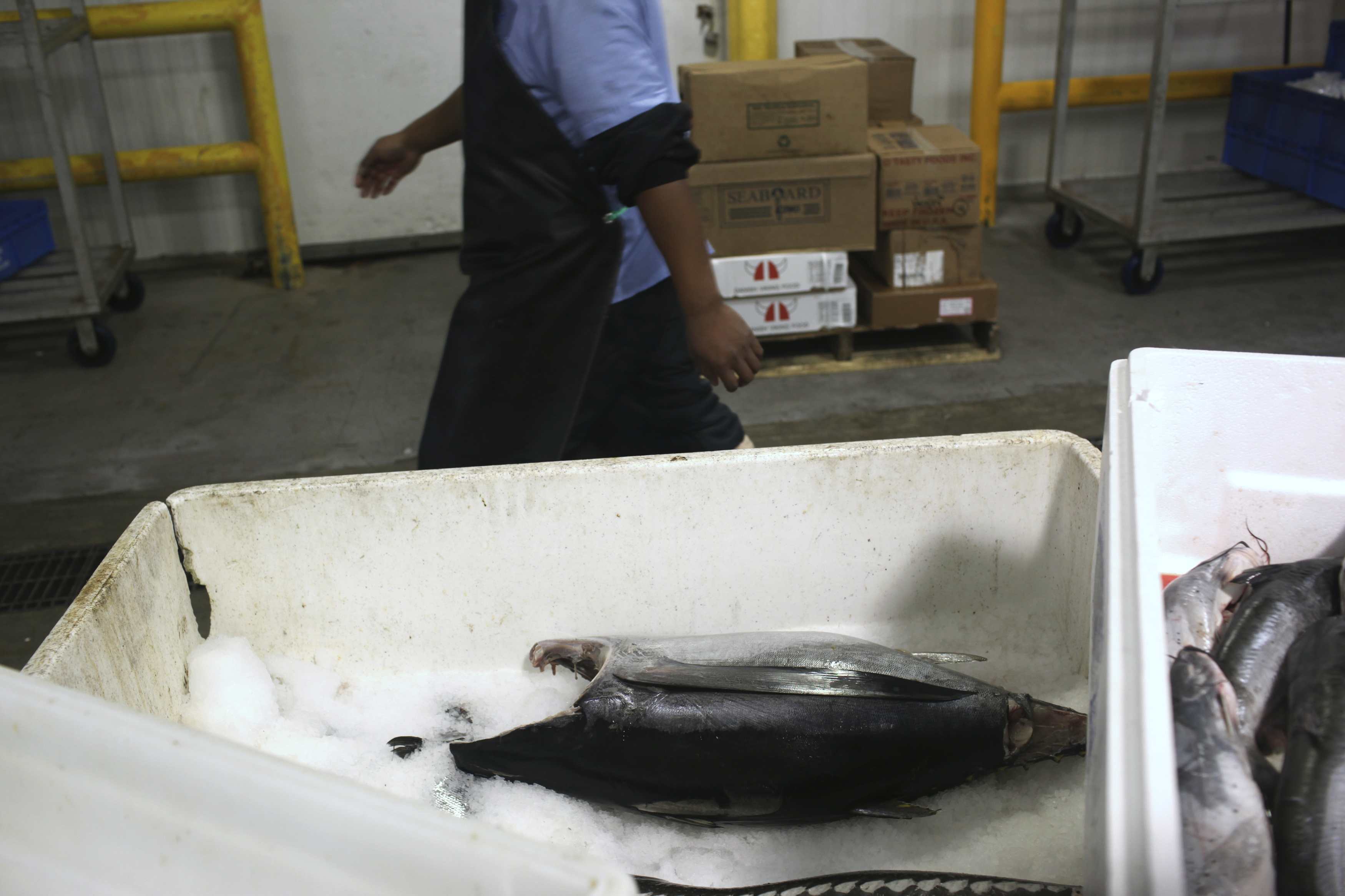 A worker walks past a box with a big eye tuna, caught in the South Pacific, in a fish processing facility at Pier 45 on Fisherman's Wharf in San Francisco, California May 30, 2012. REUTERS/Robert Galbraith