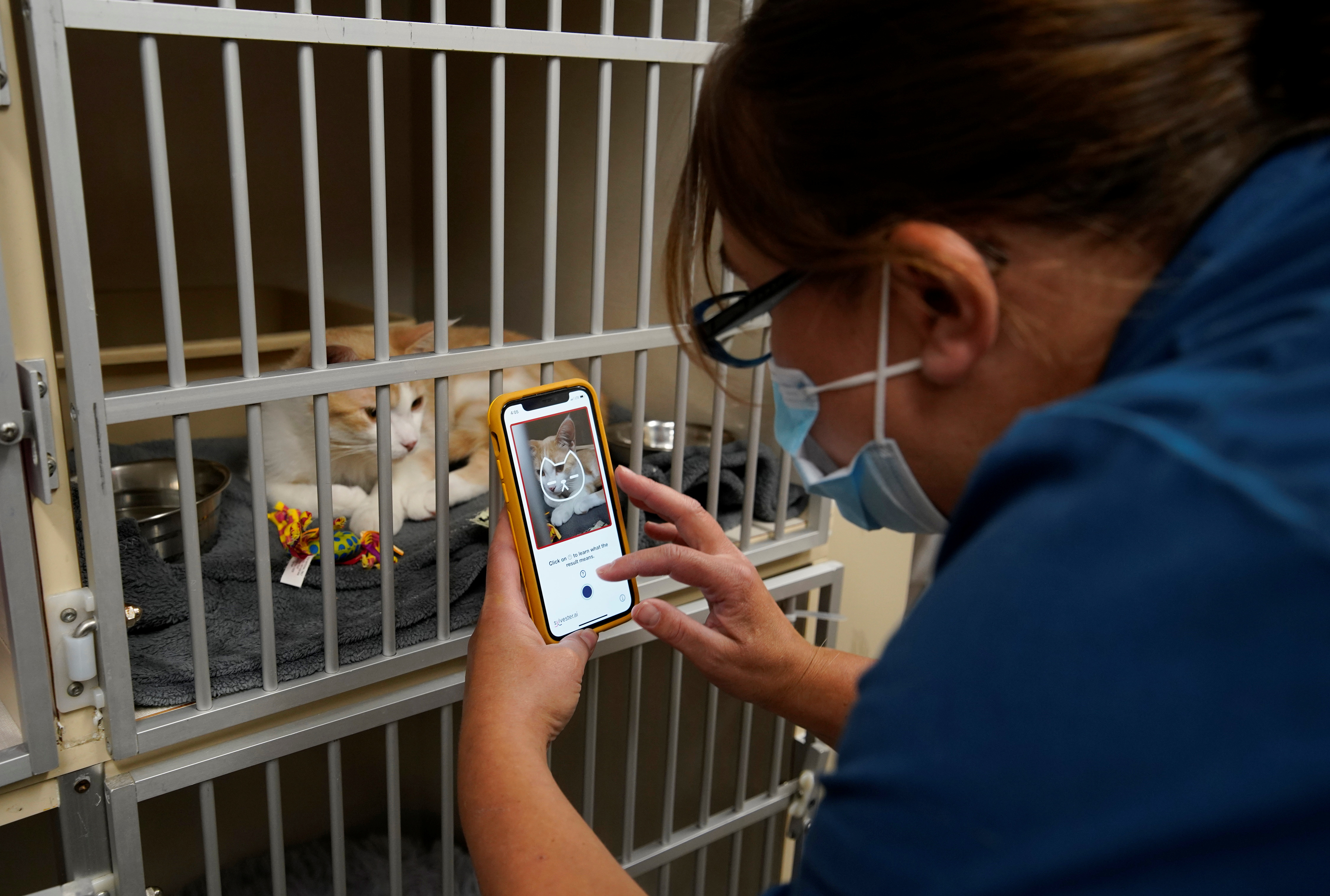 Dr. Liz Ruelle uses a new app called Tably that reads cat's faces and helps her monitor a cat's health at the Wild Rose Cat clinic in Calgary, Alberta, Canada, July 14, 2021. REUTERS/Todd Korol