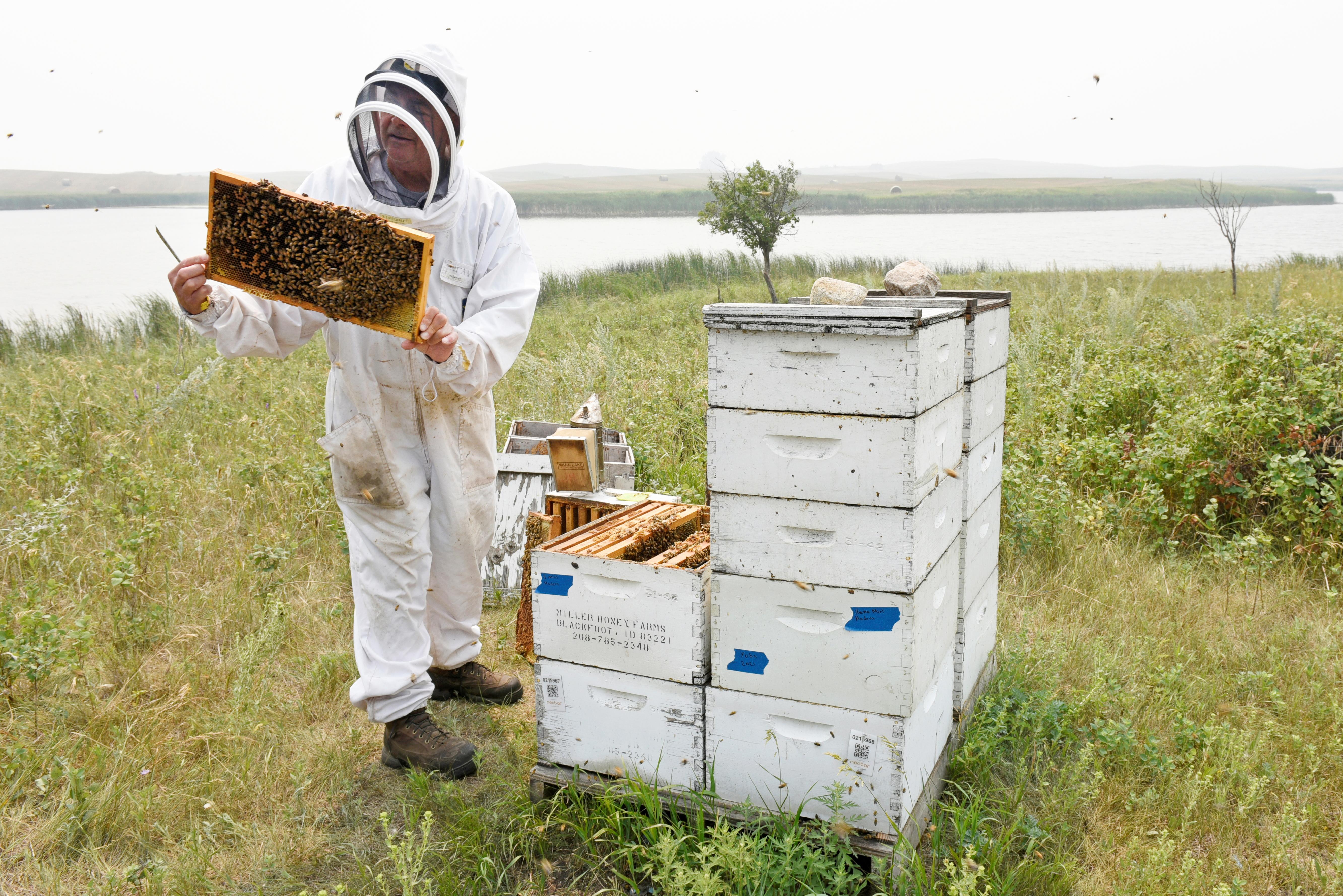John Miller, owner of Miller Honey Farms, inspects one of his bee colonies in Gackle, North Dakota, U.S. July 30, 2021.  Drought-weakened bee colonies are producing a small honey crop in North Dakota, a major U.S. honey producer. REUTERS/Dan Koeck