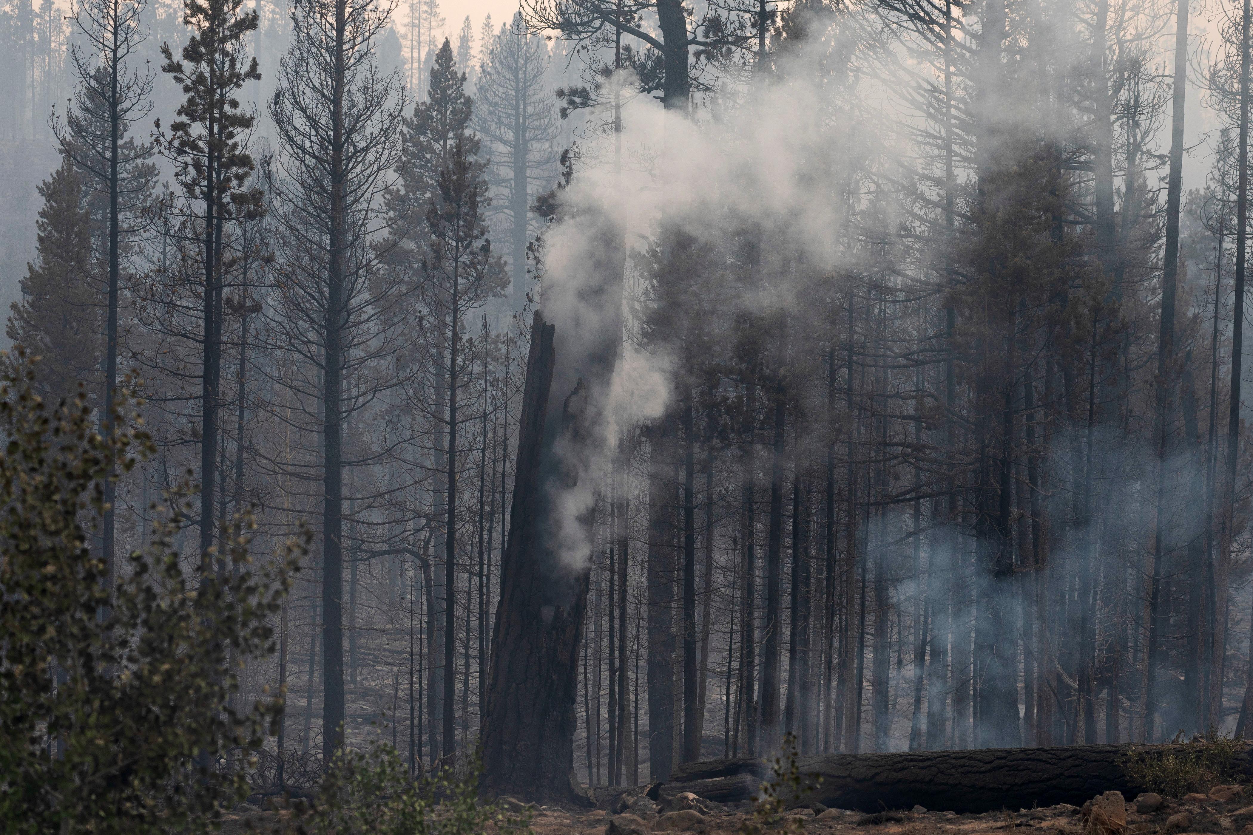 Smoke billows from a tree trunk as the Bootleg Fire burns through vegetation near Paisley, Oregon, U.S., July 20, 2021.  REUTERS/David Ryder