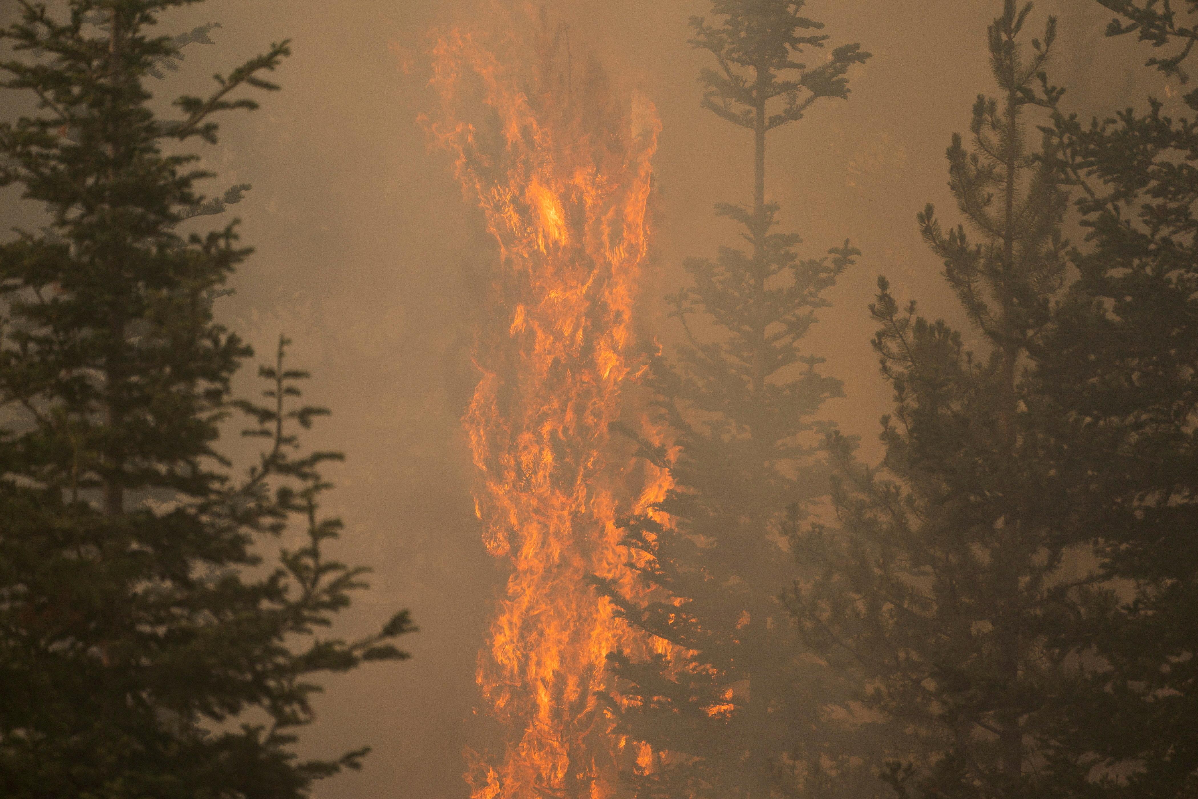 The Bootleg fire burns through vegetation near Paisley, Oregon, U.S., July 20, 2021. REUTERS/David Ryder/File Photo