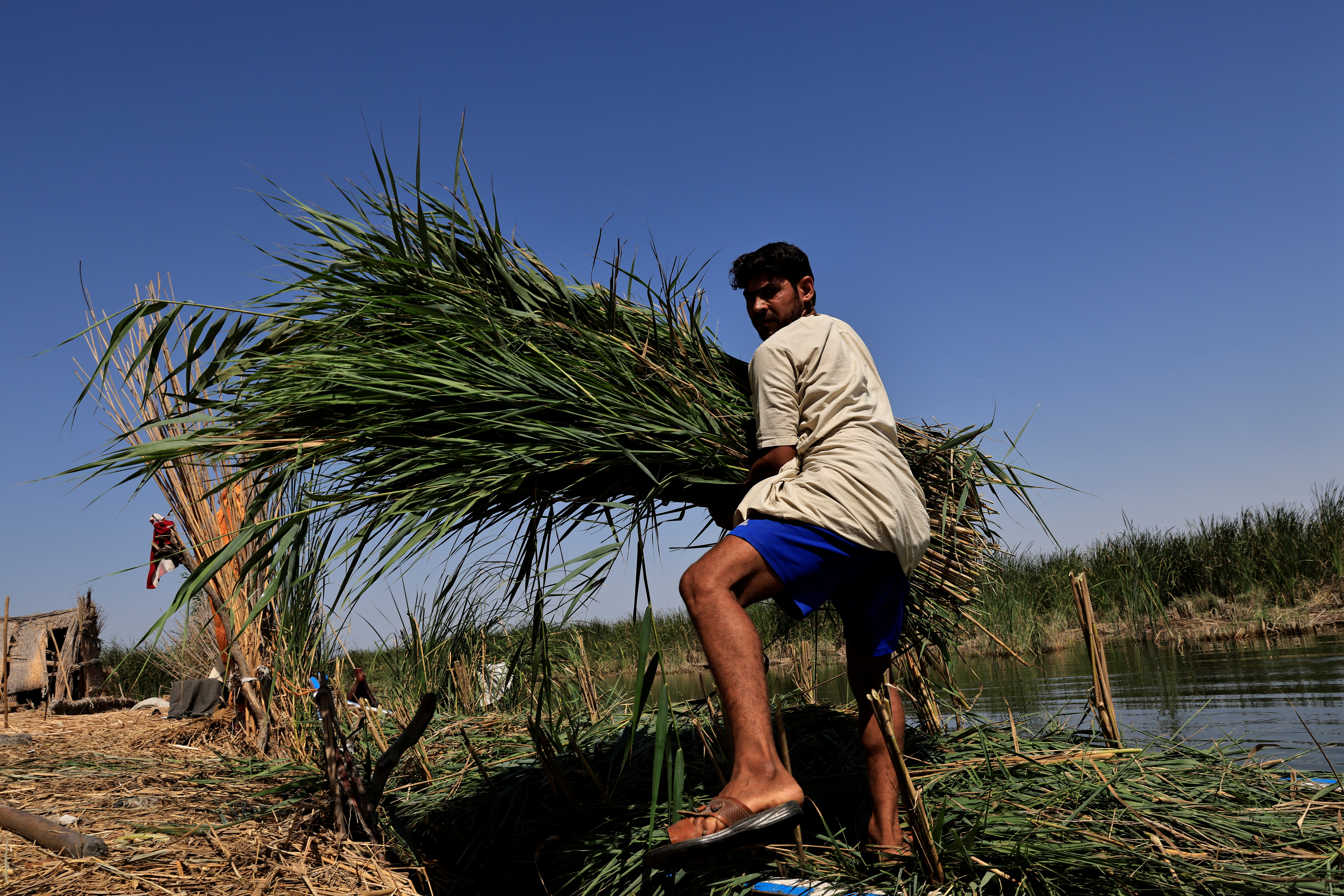 Sabah Thamer al-Baher carries reeds at the Chebayesh marsh, Dhi Qar province, Iraq, July 6, 2021. Iraq's 2020-2021 rainfall season was the second driest in 40 years, according to the United Nations, causing the salinity of the wetlands to rise to dangerous levels. Animals fell sick and died, and Baher was forced to buy fresh drinking water for his own herd of around 20 buffaloes, his only source of income. Another drought is predicted for 2023 as climate change, pollution and upstream damming keep Iraq trapped in a cycle of recurring water crises.
