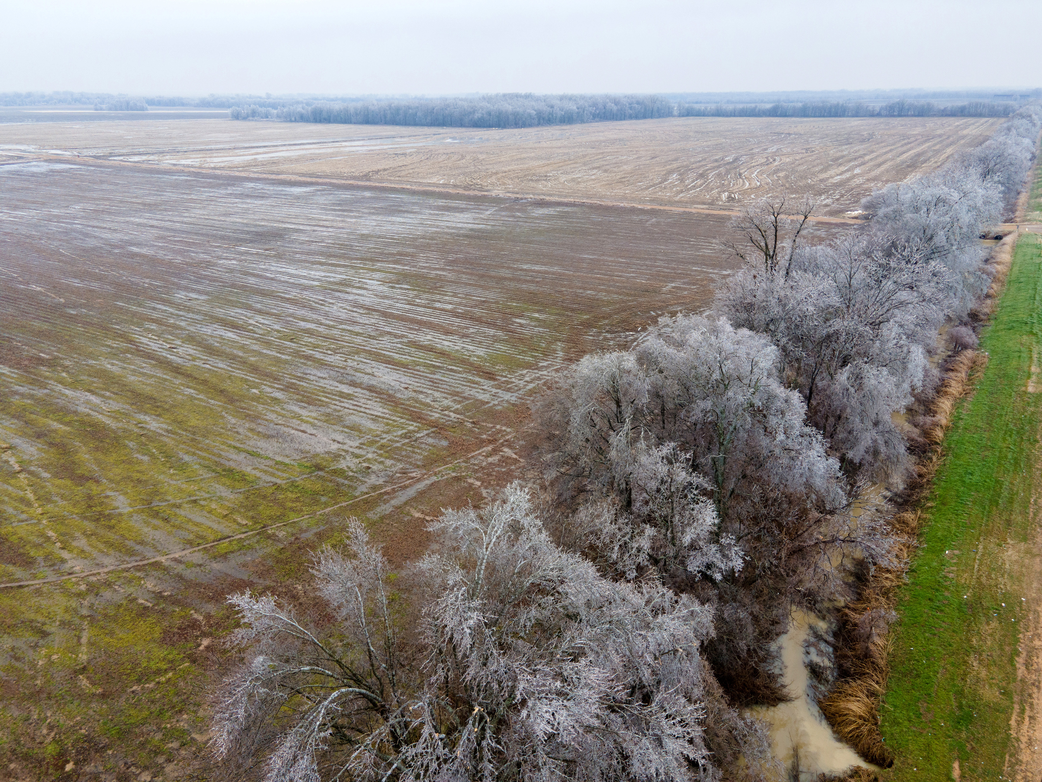 Ice covers a row of trees alongside farmland during extreme cold weather in Mound Bayou, Mississippi, U.S., February 11, 2021.  REUTERS/Rory Doyle