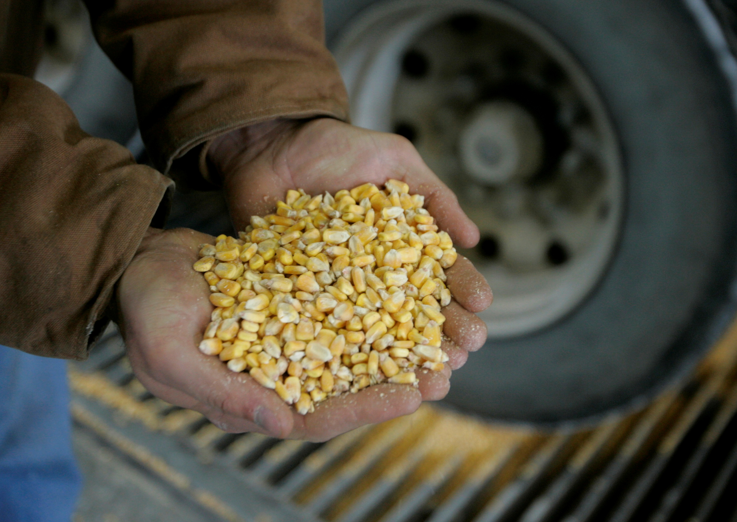 Raw corn is shown as it is unloaded for processing at the Lincolnway Energy plant in the town of Nevada, Iowa, December 6, 2007. The company, one of a growing number across Iowa and the United States, converts corn to ethanol fuel to be used in flexible-fuelled vehicles as an alternative energy source to oil. The business operates around the clock seven days a week, processing approximately 50,000 bushels (1.27 tonnes) of corn daily, and creating 150,000 gallons (567,752 litres) of ethanol per day.      REUTERS/Jason Reed/File Photo
