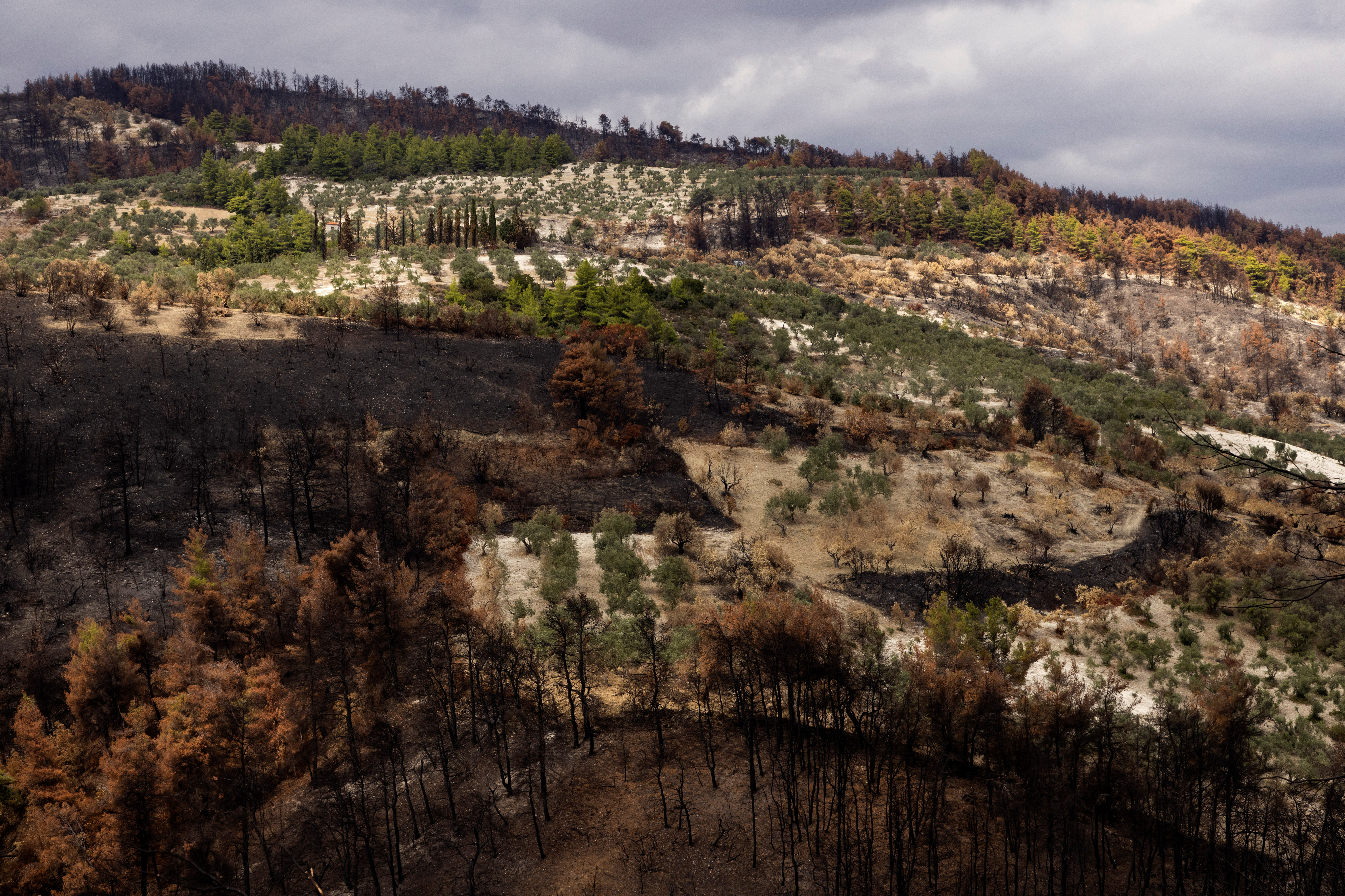 A view shows burnt parts of a forest on the island of Evia, Greece, September 23, 2021. Picture taken September 23, 2021. REUTERS/Alkis Konstantinidis