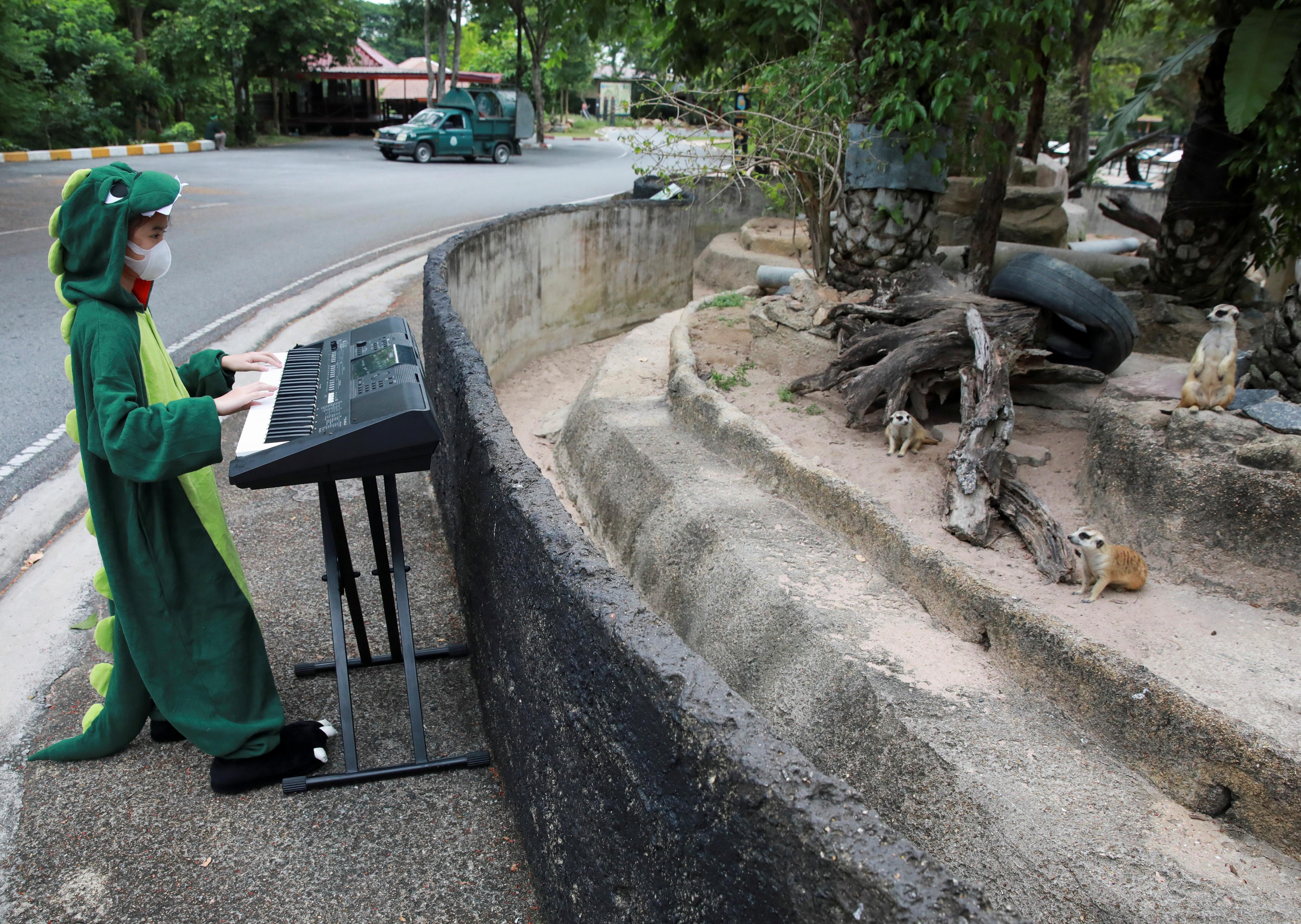 Meerkats are seen as Seenlada Supat, 11, plays keyboard for animals amid the coronavirus disease (COVID-19) outbreak, at a zoo in Chonburi, Thailand May 26, 2021. REUTERS/Soe Zeya Tun