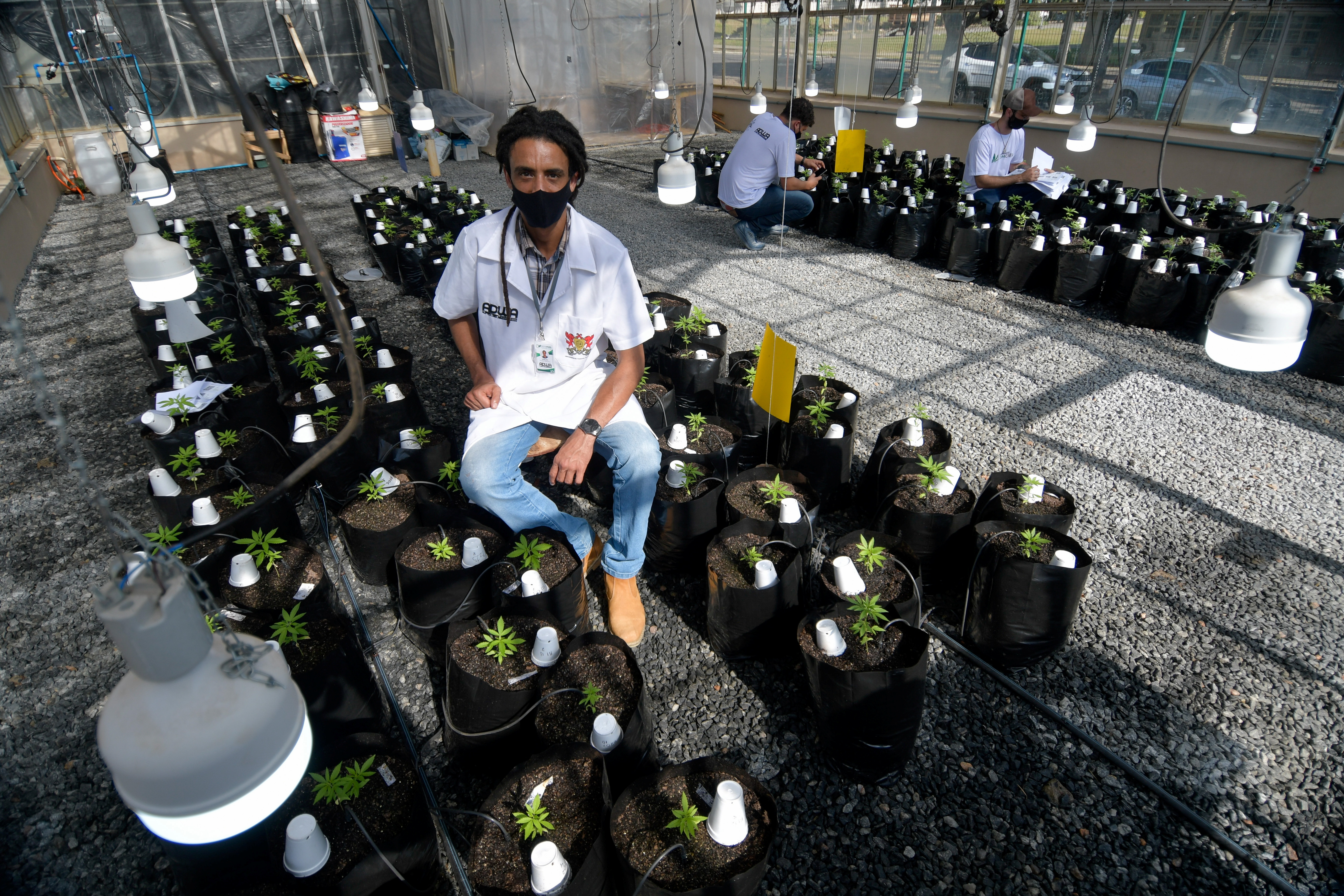 Agronomist Engineer Sergio Rocha, 36, Executive Director of the cannabis cultivation for research and cultivation project, poses for a picture in a greenhouse at the Federal University of Vicosa, Minas Gerais state, Brazil, August 18, 2021. Picture taken August 18, 2021. REUTERS/Washington Alves