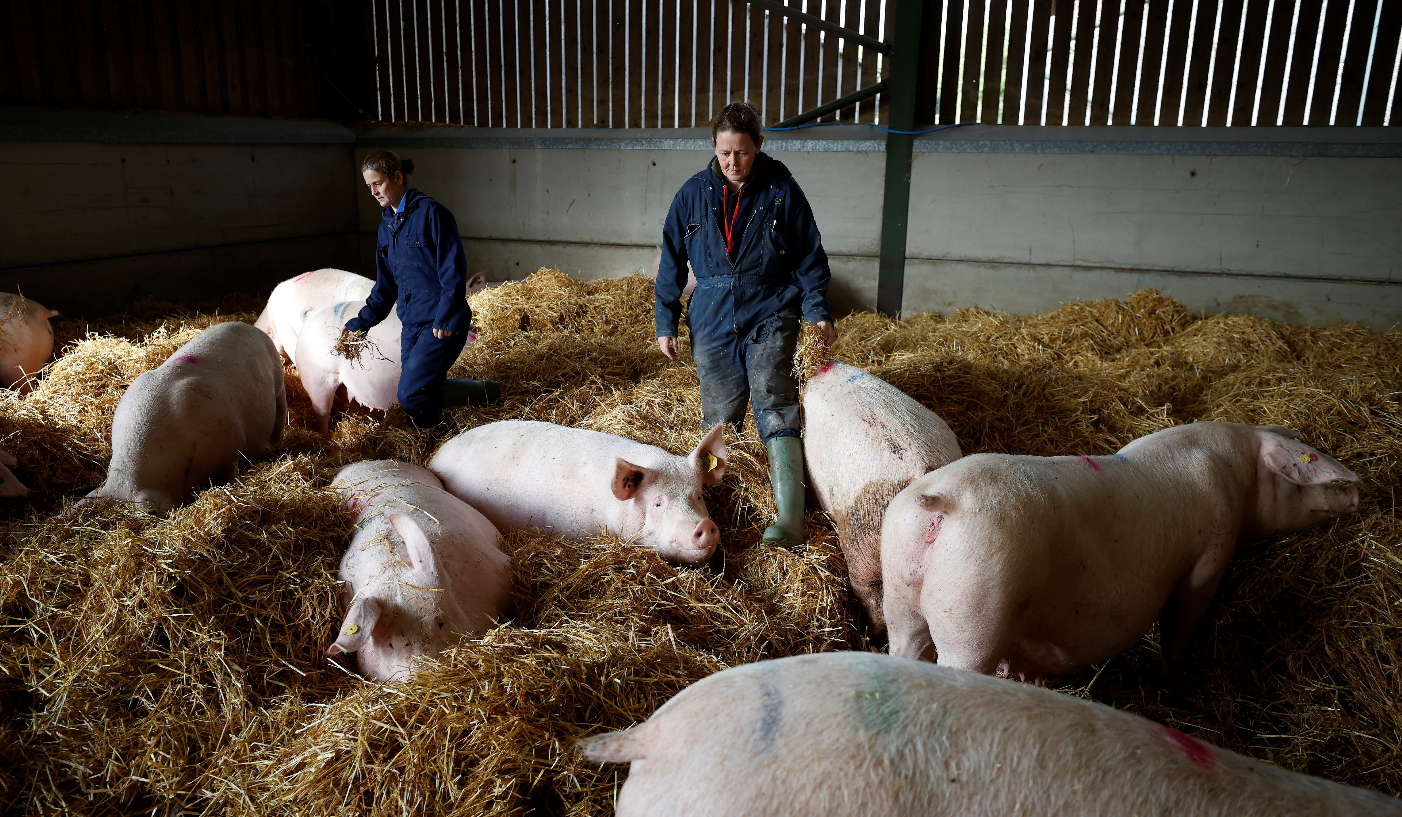 Farmers Kate Morgan (L) and Vicky Scott stand with some of their breeding sows on their family pig farm near Driffield, Britain, October 12, 2021. REUTERS/Phil Noble