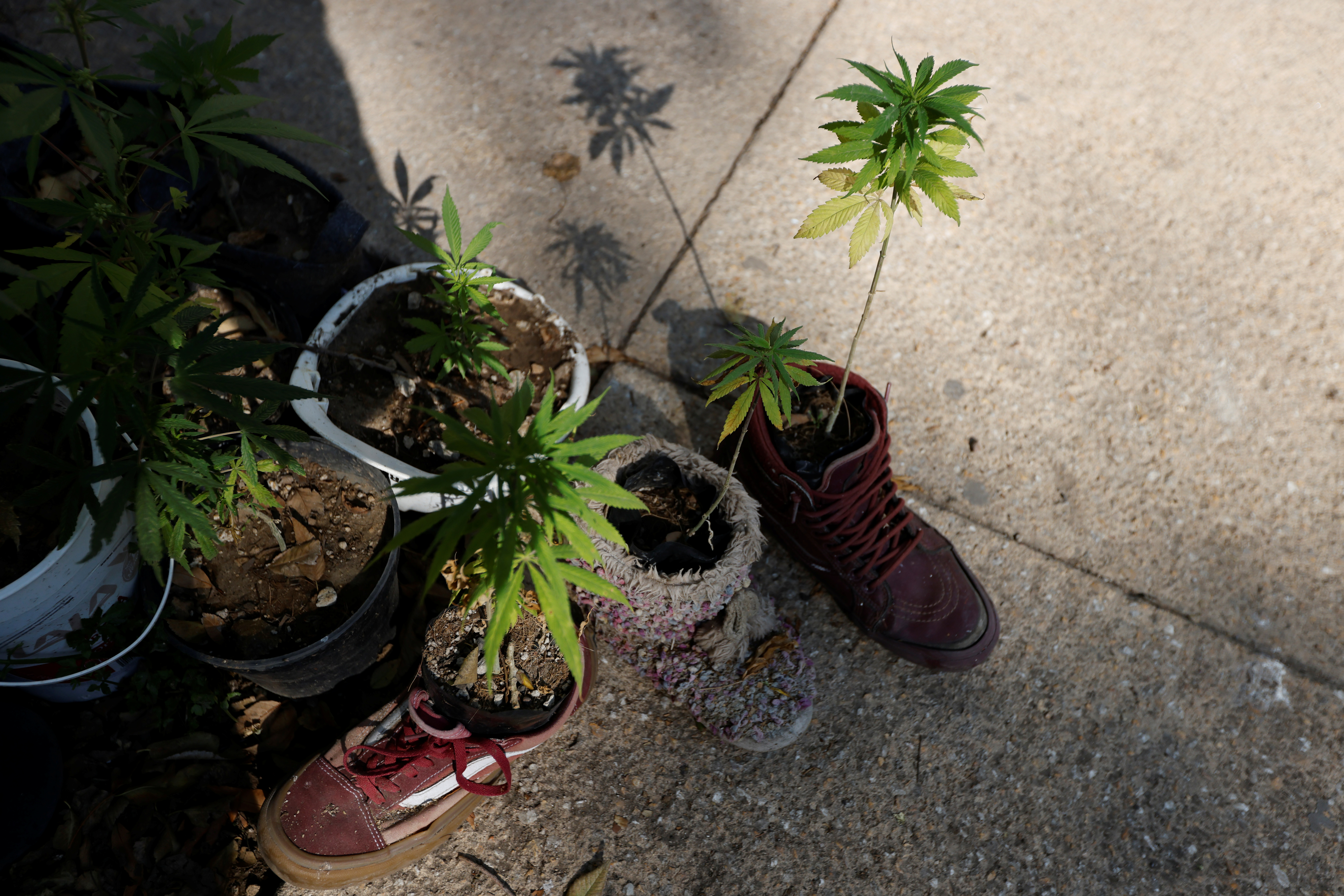 Marijuana plants placed in shoes are seen next to Mexico