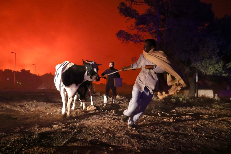 Locals evacuate the area with their animals as a wildfire rages in the suburb of Thrakomakedones, north of Athens, Greece, August 7, 2021. REUTERS/Giorgos Moutafis