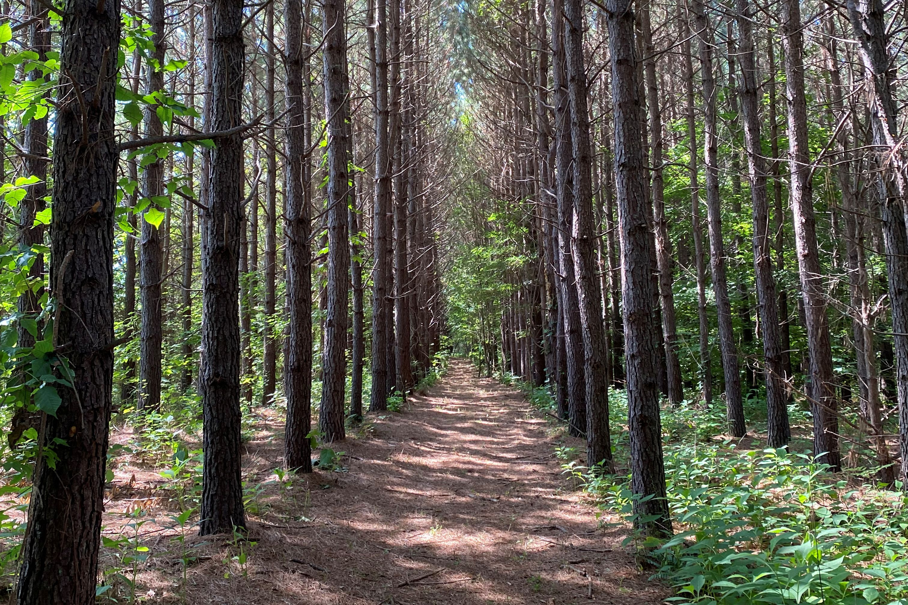 A trail though a forest, which is planned for development of Piedmont Lithium's mine, is seen in Gaston County, North Carolina, U.S., July 15, 2021.    REUTERS/Ernest Scheyder/Files