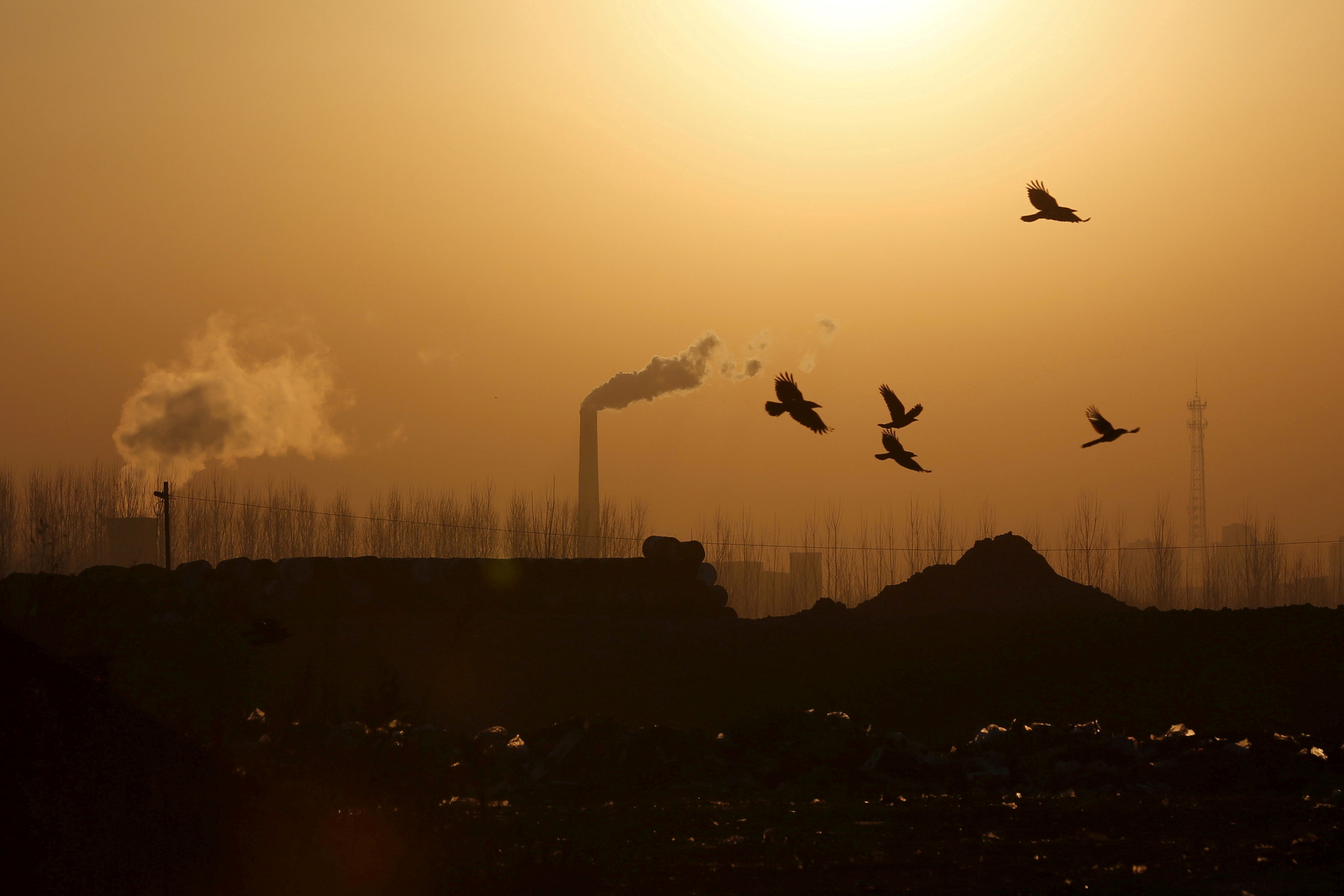Birds fly over a closed steel factory where chimneys of another working factory are seen in background, in Tangshan, Hebei province, China, February 27, 2016.  REUTERS/Kim Kyung-Hoon