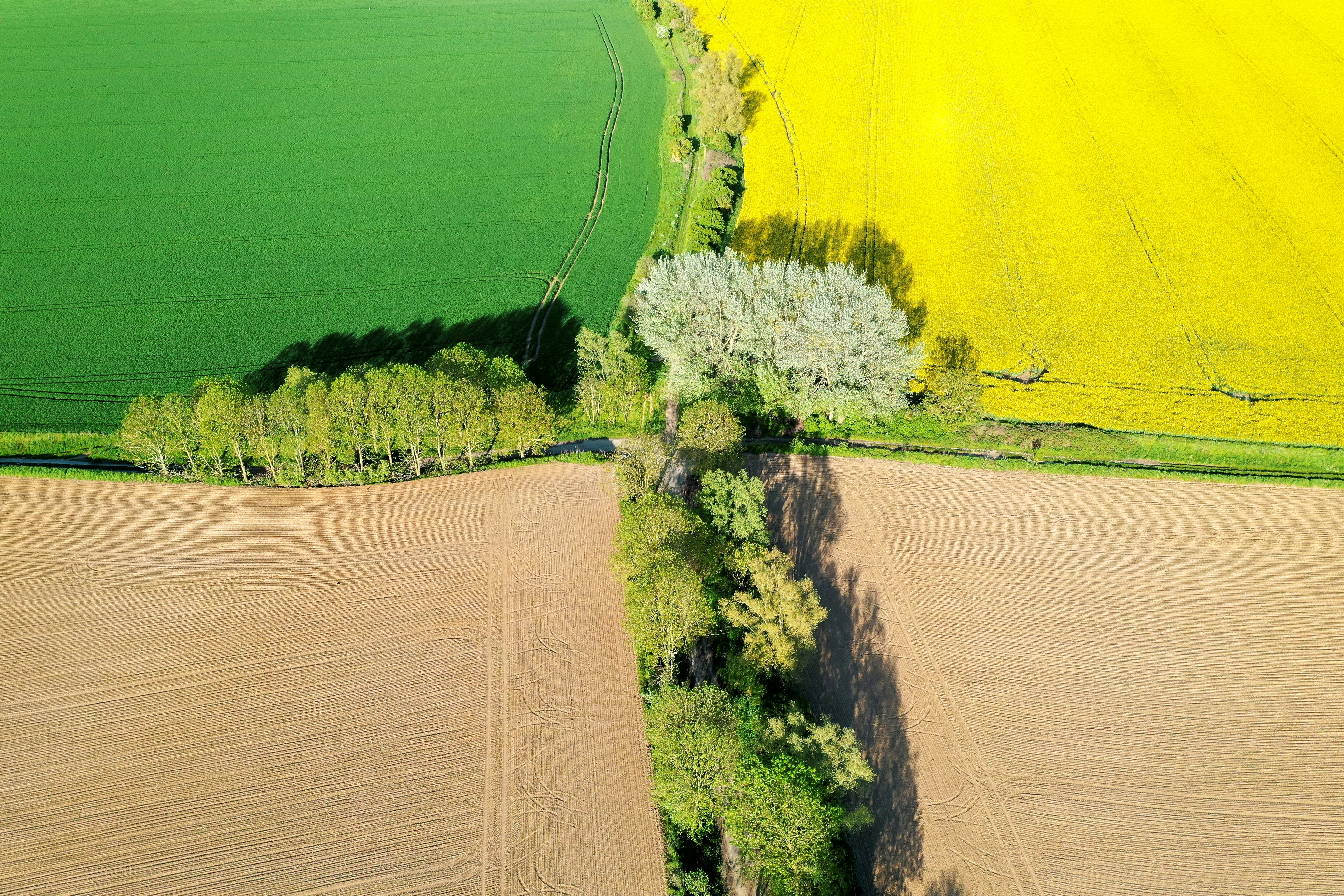 An aerial view shows a yellow rapeseed, wheat and sugar beet fields in Carnieres, France, May 18, 2021. REUTERS/Pascal Rossignol/File Photo