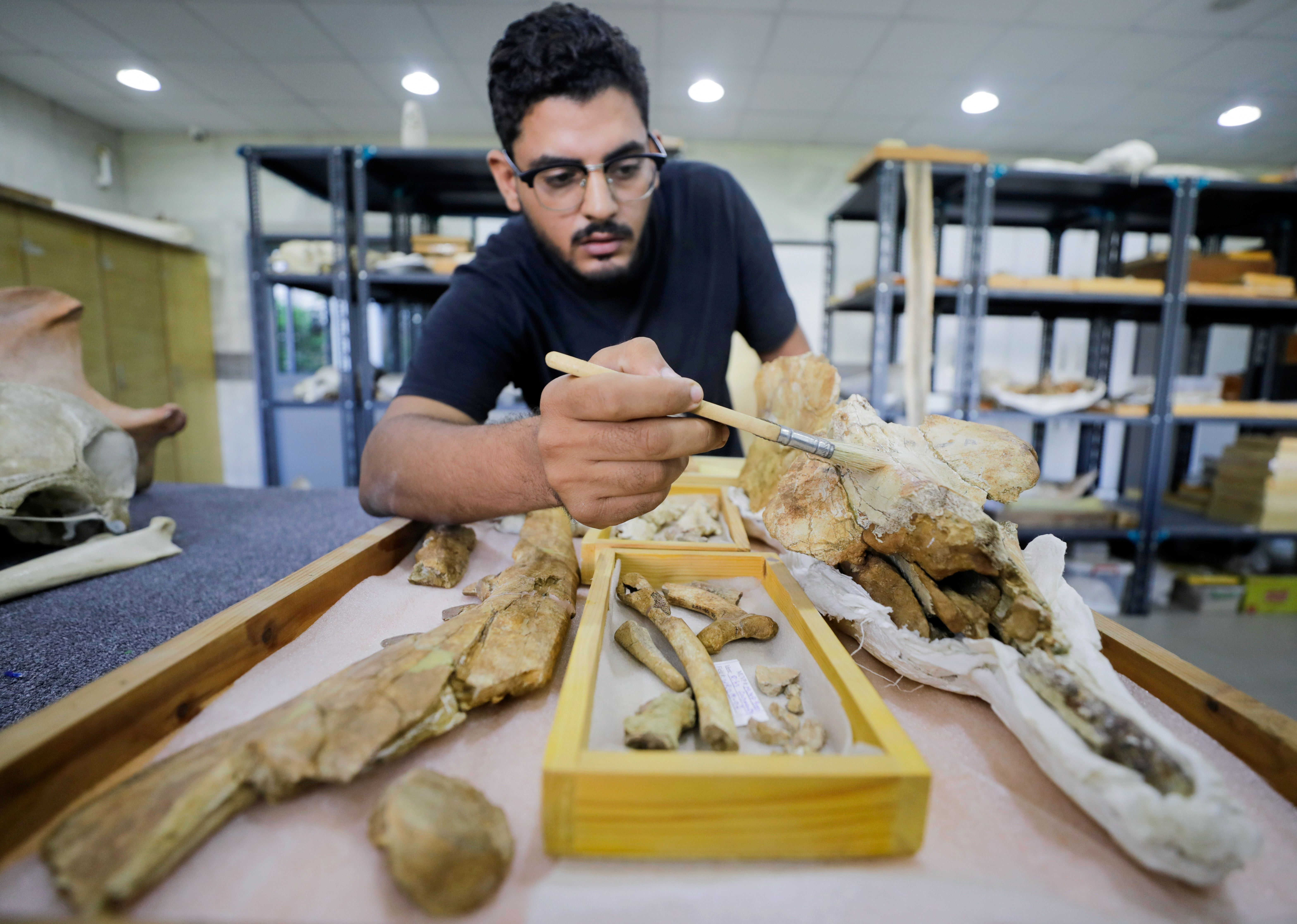 """Abdullah Gohar, a researcher at El Mansoura, university works on renovating the 43 million-year-old fossil of a previously unknown four-legged amphibious whale called """"Phiomicetus Anubis"""", that helps trace the transition of whales from land to sea, which were discovered in the Fayum Depression in the Western Desert of Egypt, near the town of El Mansoura, north of Cairo, Egypt August 26, 2021. REUTERS/Mohamed Abd El Ghany - RC22DP96634K"""