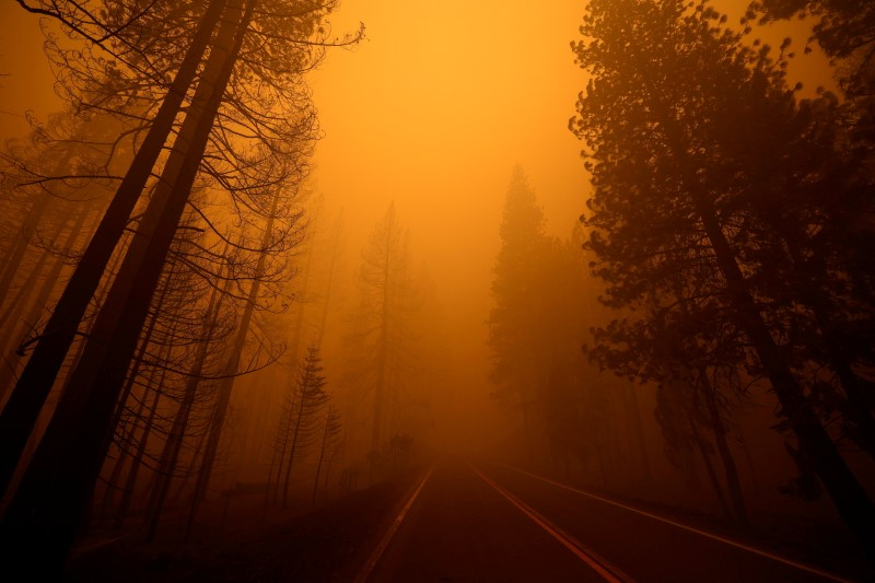 A view shows Highway 89 with burned trees on one side and unburned trees on the other at the site of the Dixie Fire, a wildfire near the town of Greenville, California, U.S. August 7, 2021. REUTERS/Fred Greaves/File Photo