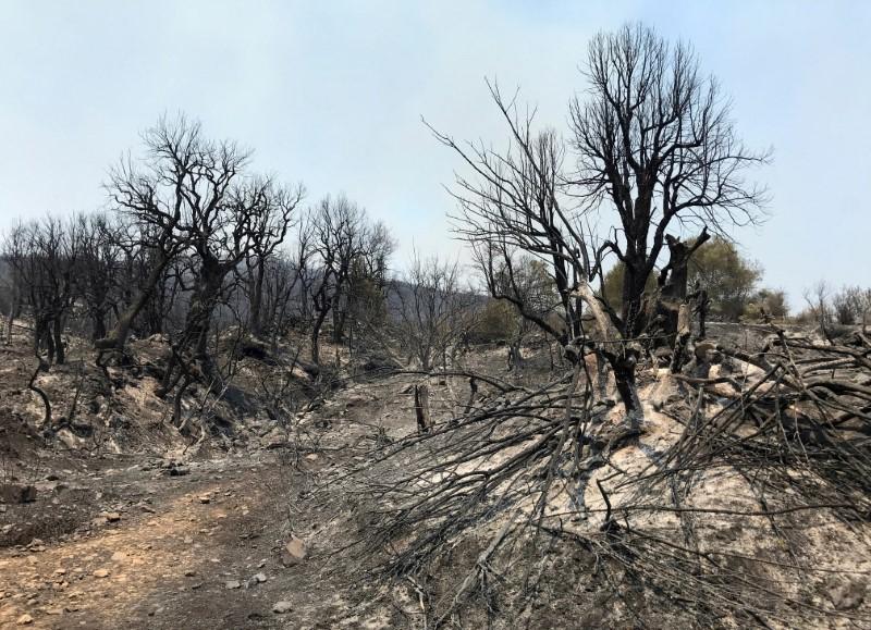 Burnt trees are seen following a wildfire in Zekri, in the mountainous Kabylie region of Tizi Ouzou, east of Algiers, Algeria August 11, 2021. REUTERS/Abdelaziz Boumzar/File Photo