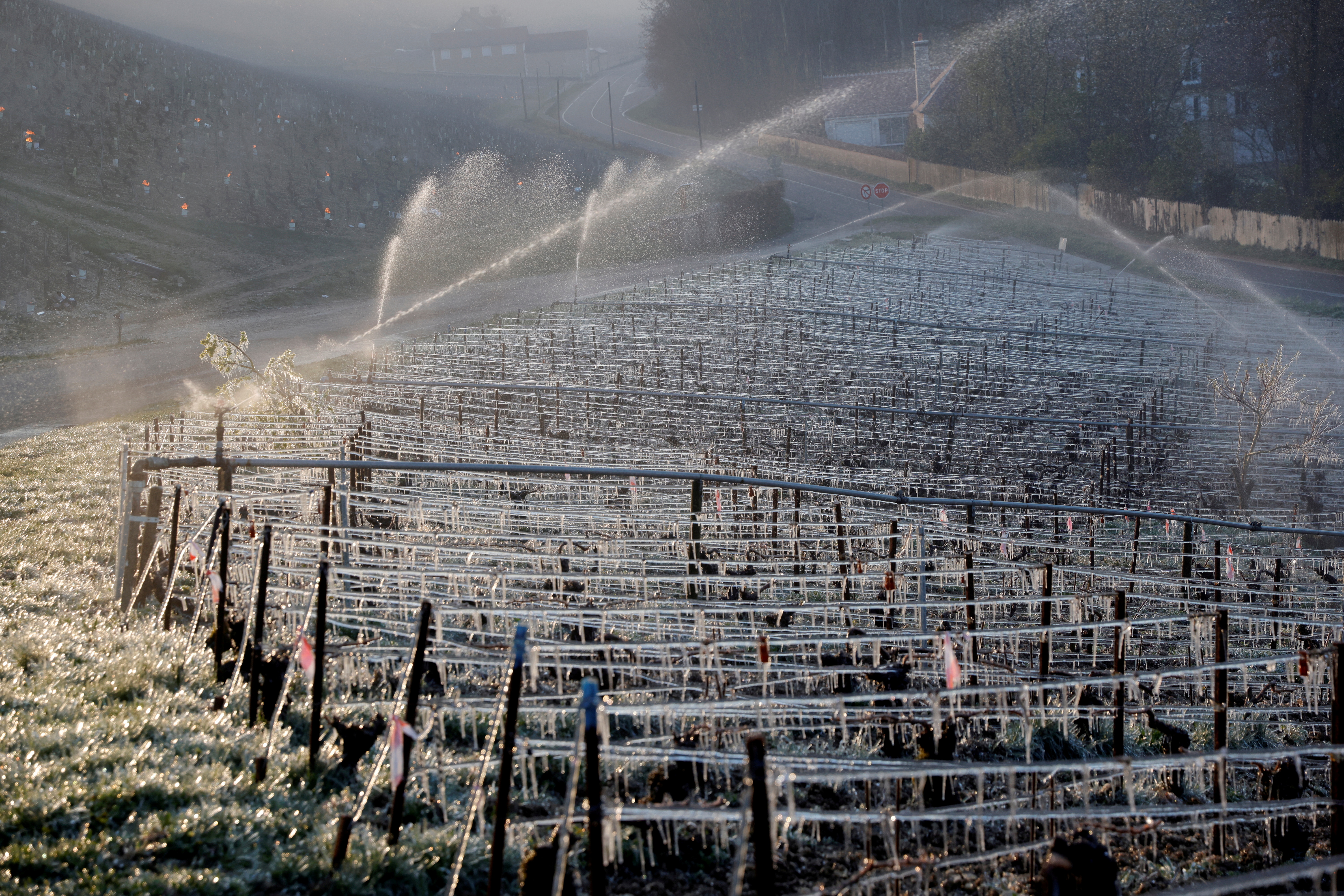 Water is sprayed early in the morning to protect vineyards from frost damage outside Chablis, France, April 7,2021. REUTERS/Pascal Rossignol//File Photo