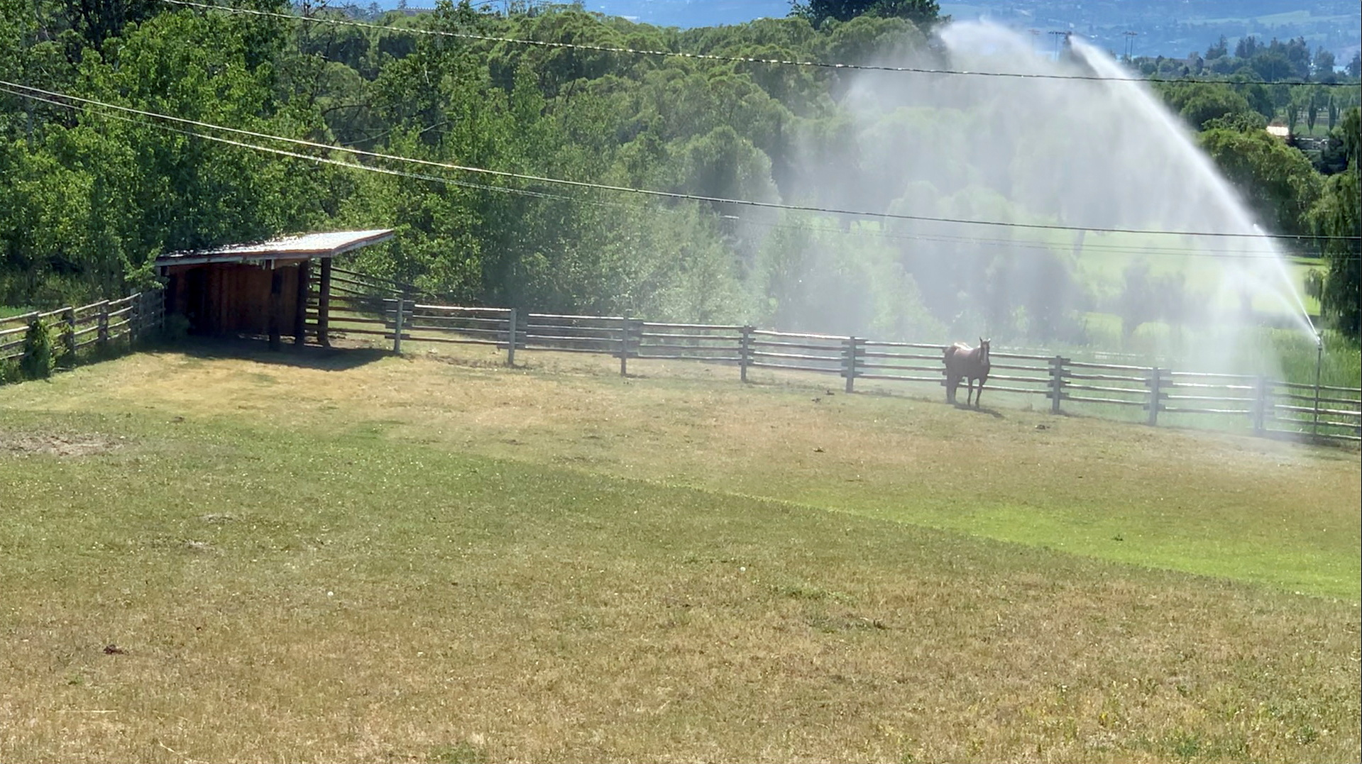 Sprinklers spray water on a horse amid a heatwave in Kelowna, British Columbia, Canada, June 27, 2021, in this still image from video obtained via social media. Video taken June 27, 2021. TWITTER @CANADIANBYLUCK via REUTERS/File Photo