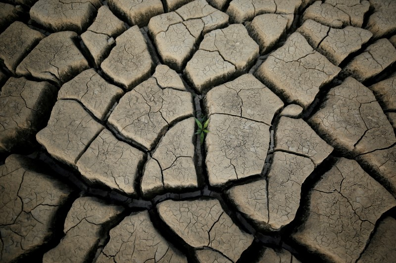A plant grows between cracked mud in a normally submerged area at Theewaterskloof dam near Cape Town, South Africa, January 21, 2018. REUTERS/Mike Hutchings
