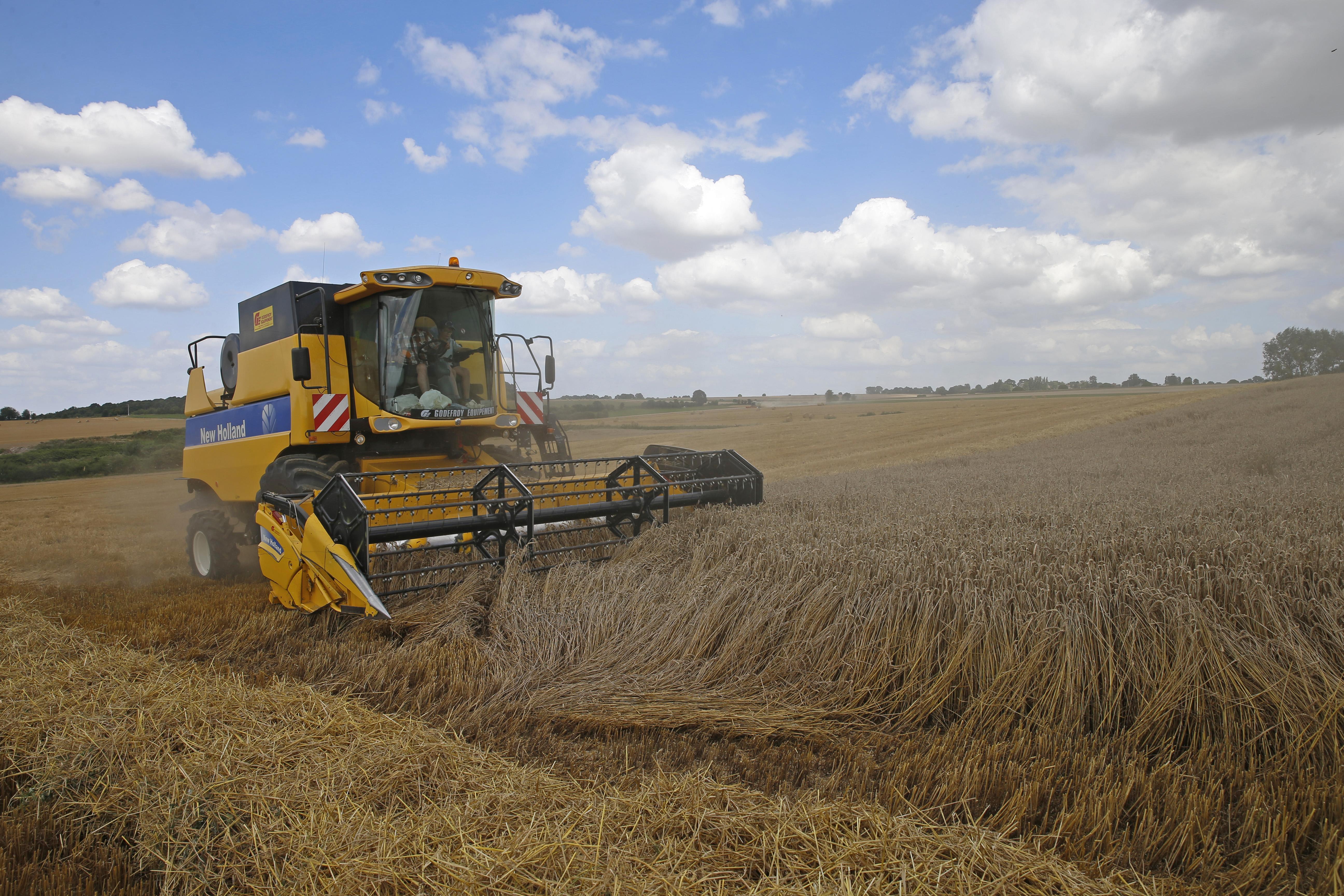 A French farmer harvests wheat in Honnecourt-sur-Escaut, near Cambrai, France, August 9, 2016. REUTERS/Pascal Rossignol