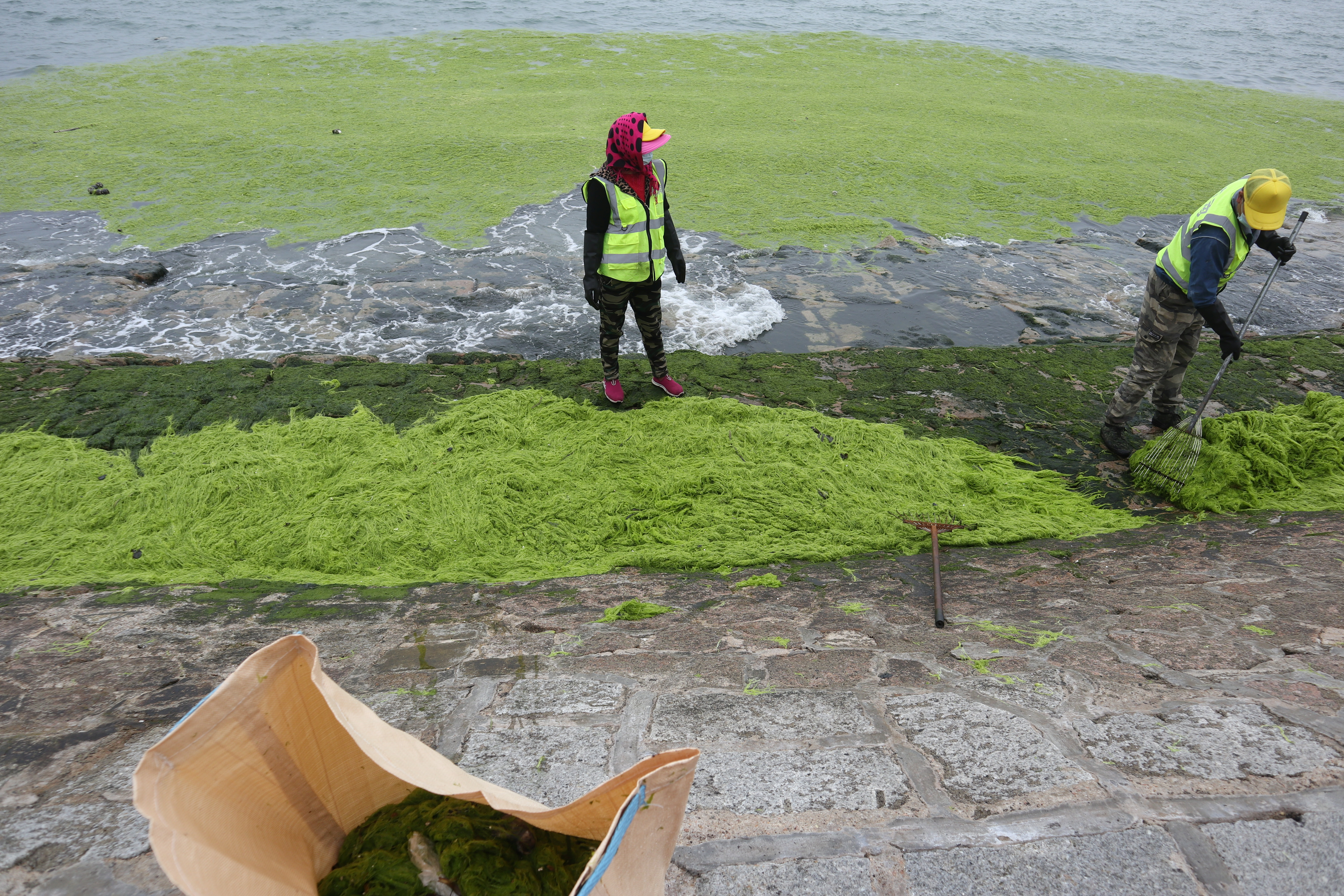 Workers clear algae along the coast in Qingdao, Shandong province, China June 12, 2021. Picture taken June 12, 2021. China Daily via REUTERS