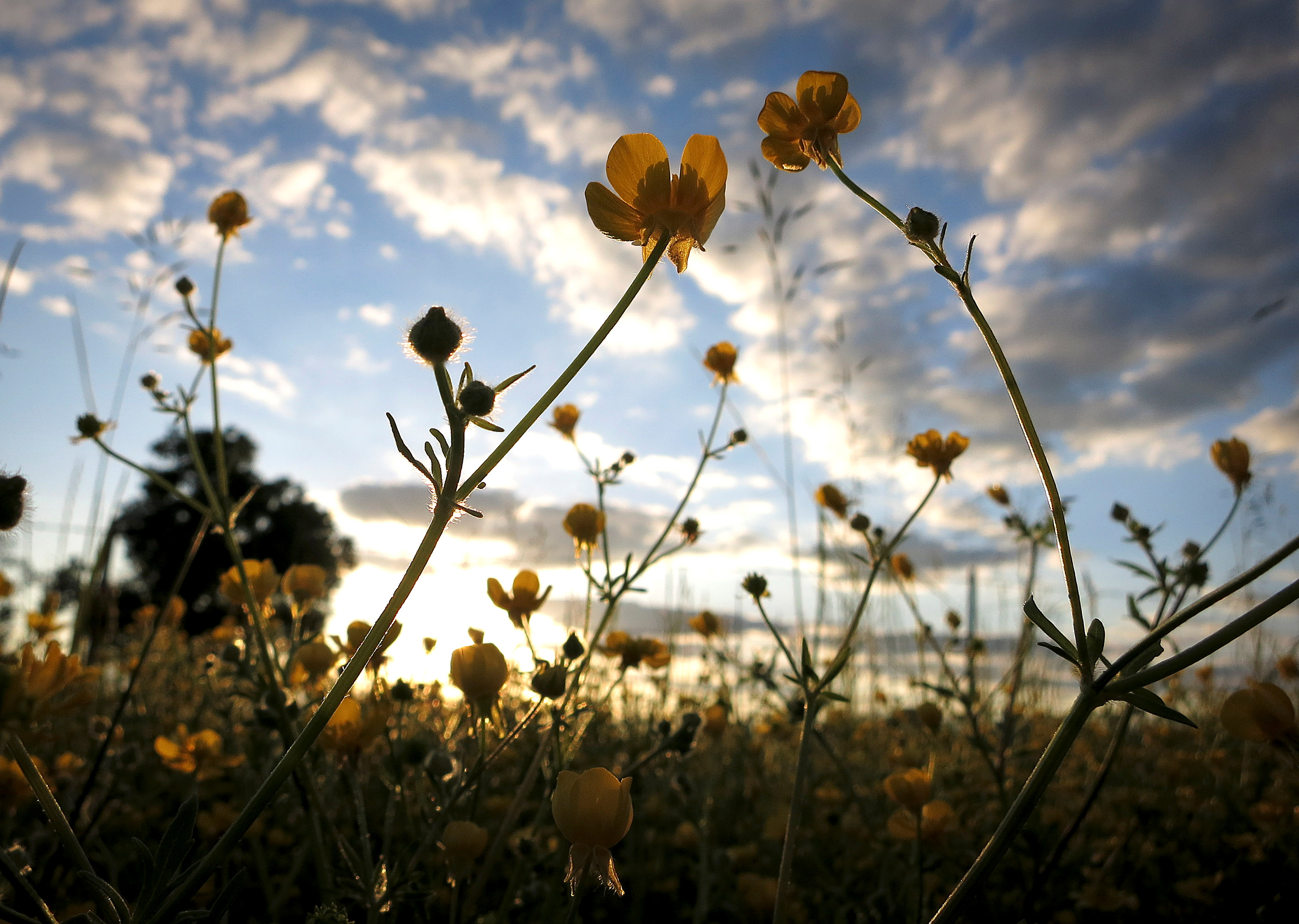 Wild flowers are pictured at sunset in Vilonia, Arkansas on April 30, 2014. Picture taken April 30, 2014. REUTERS/Carlo Allegri