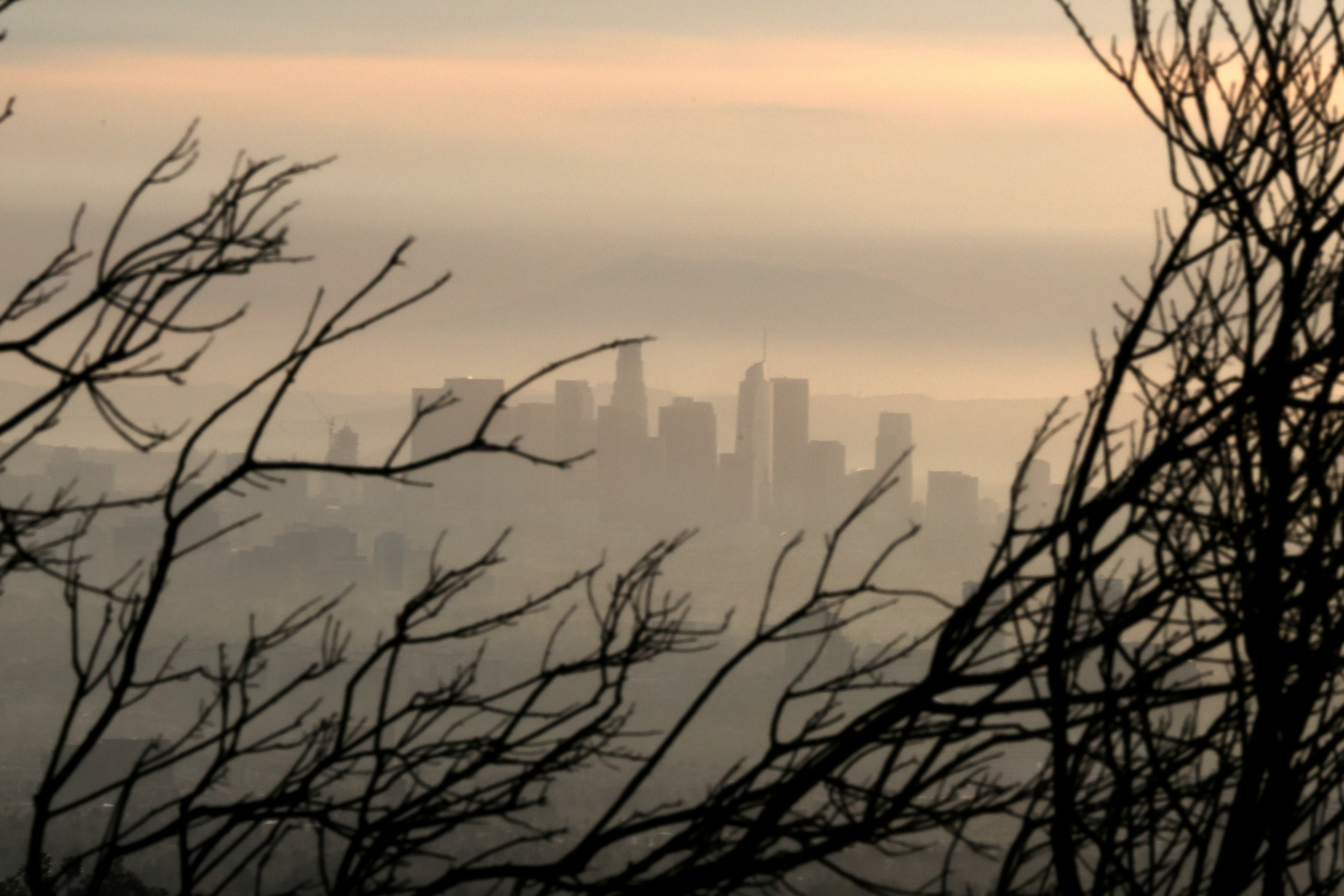 Downtown Los Angeles is seen behind a tree burned by wildfire before expected heavy rains, as the coronavirus disease (COVID-19) continues, in Los Angeles, California, U.S., January 28, 2021. REUTERS/Lucy Nicholson