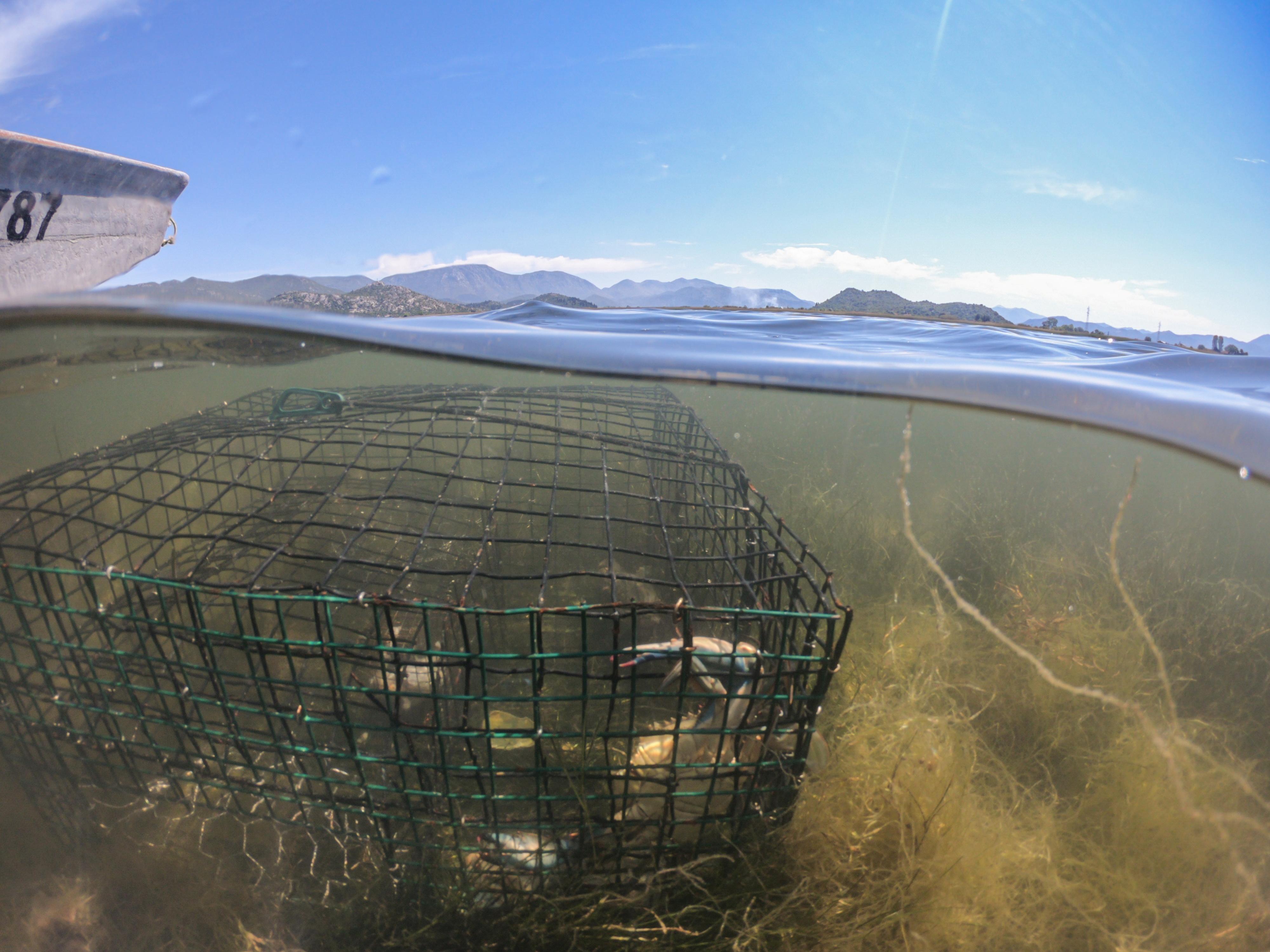 Caught blue crabs are seen in a trap in Adriatic Sea near Ploce, Croatia, May 11, 2021. REUTERS/Antonio Bronic
