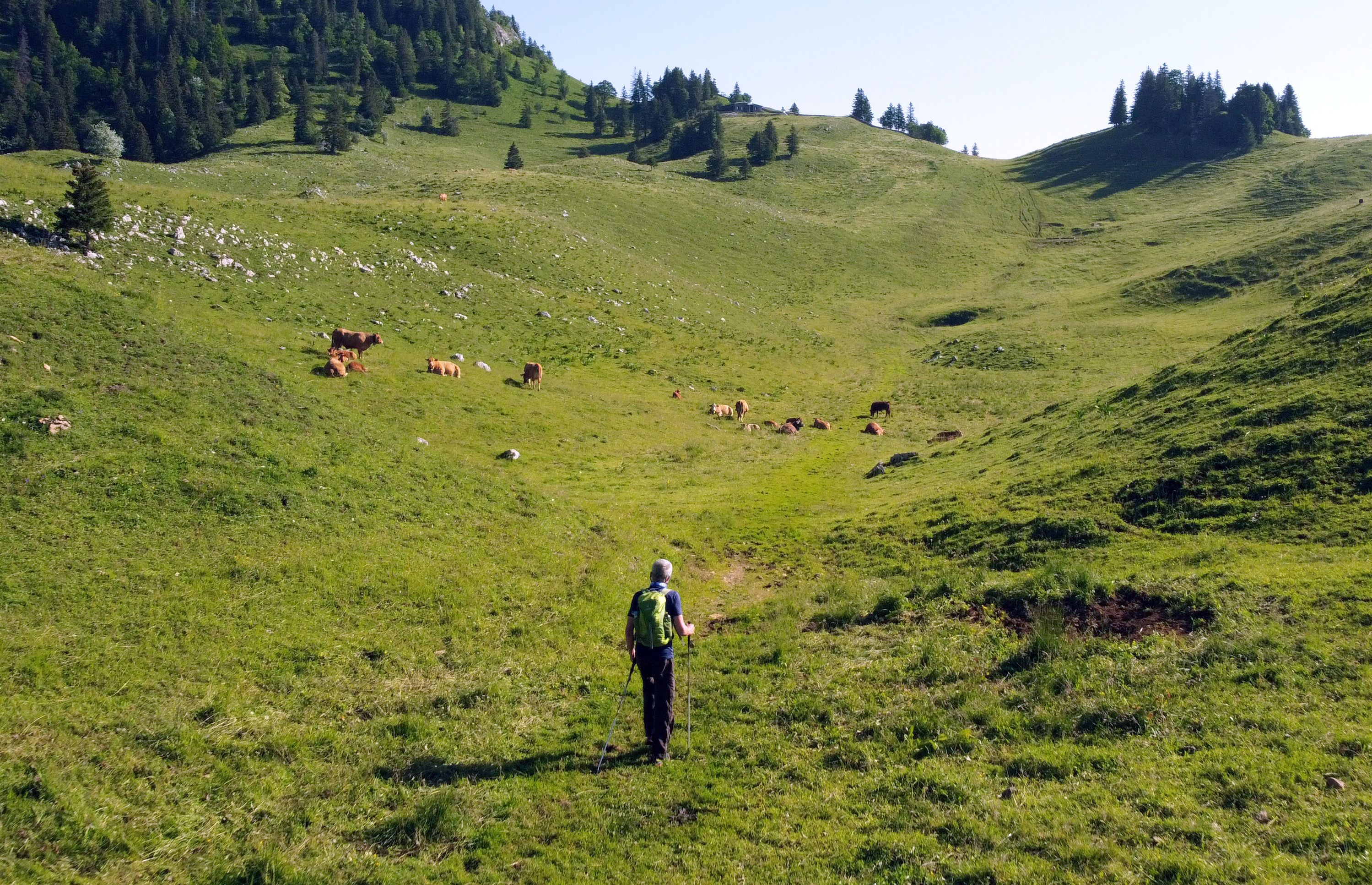 Yves Auberson, who has Parkinson disease and recently walked 1122 kilometres through the Alps, hikes in a pasture at La Dole in Cheserex near Geneva, Switzerland, July 19, 2021. REUTERS/Denis Balibouse