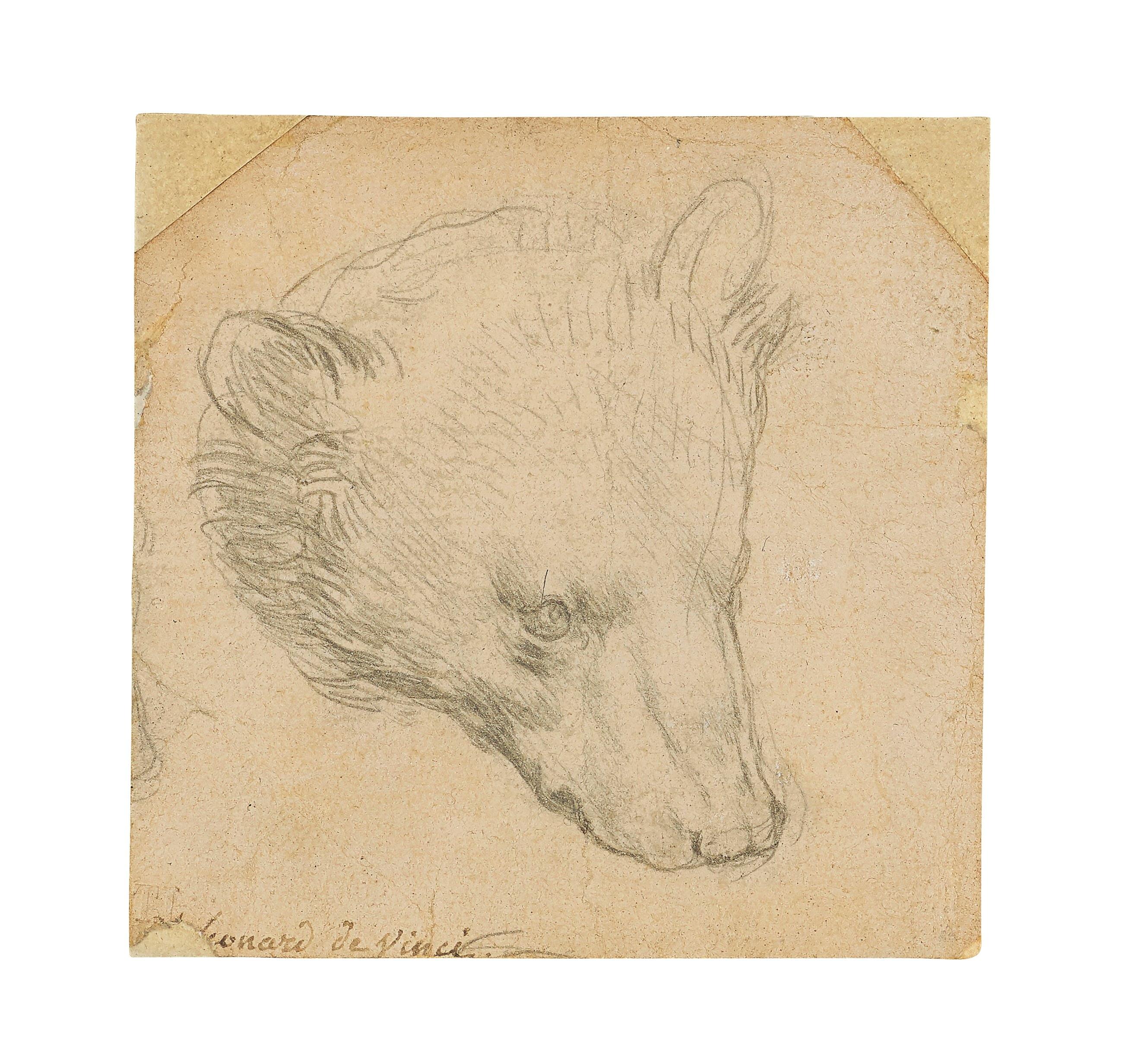 "Leonardo da Vinci's (1452-1519) ""Head of a bear"" drawing is seen in this undated handout image. Copyright Christie's2021/Handout via REUTERS"