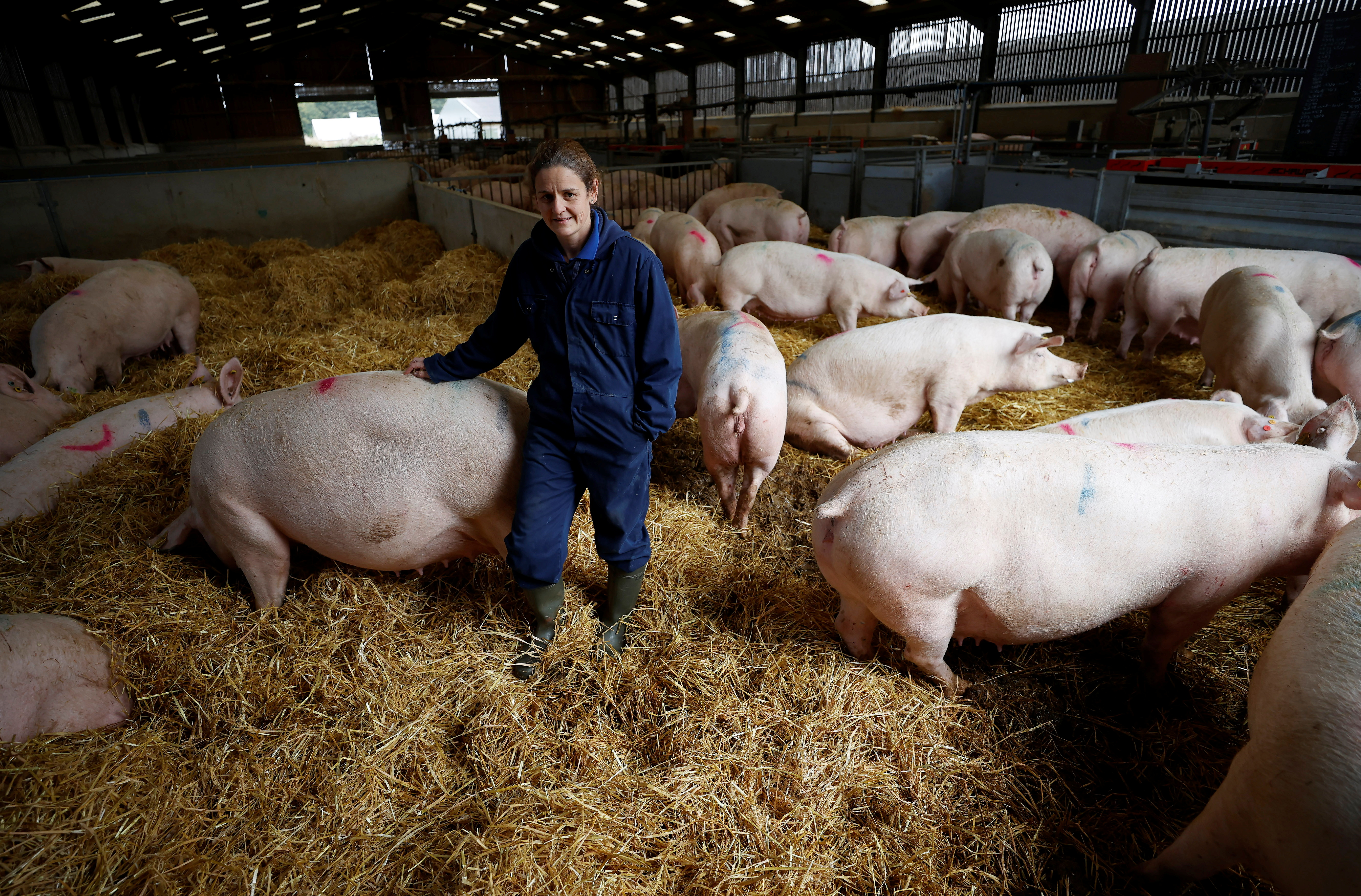 Farmer Kate Morgan stands with some of her breeding sows on her family pig farm near Driffield, Britain, October 12, 2021. REUTERS/Phil Noble