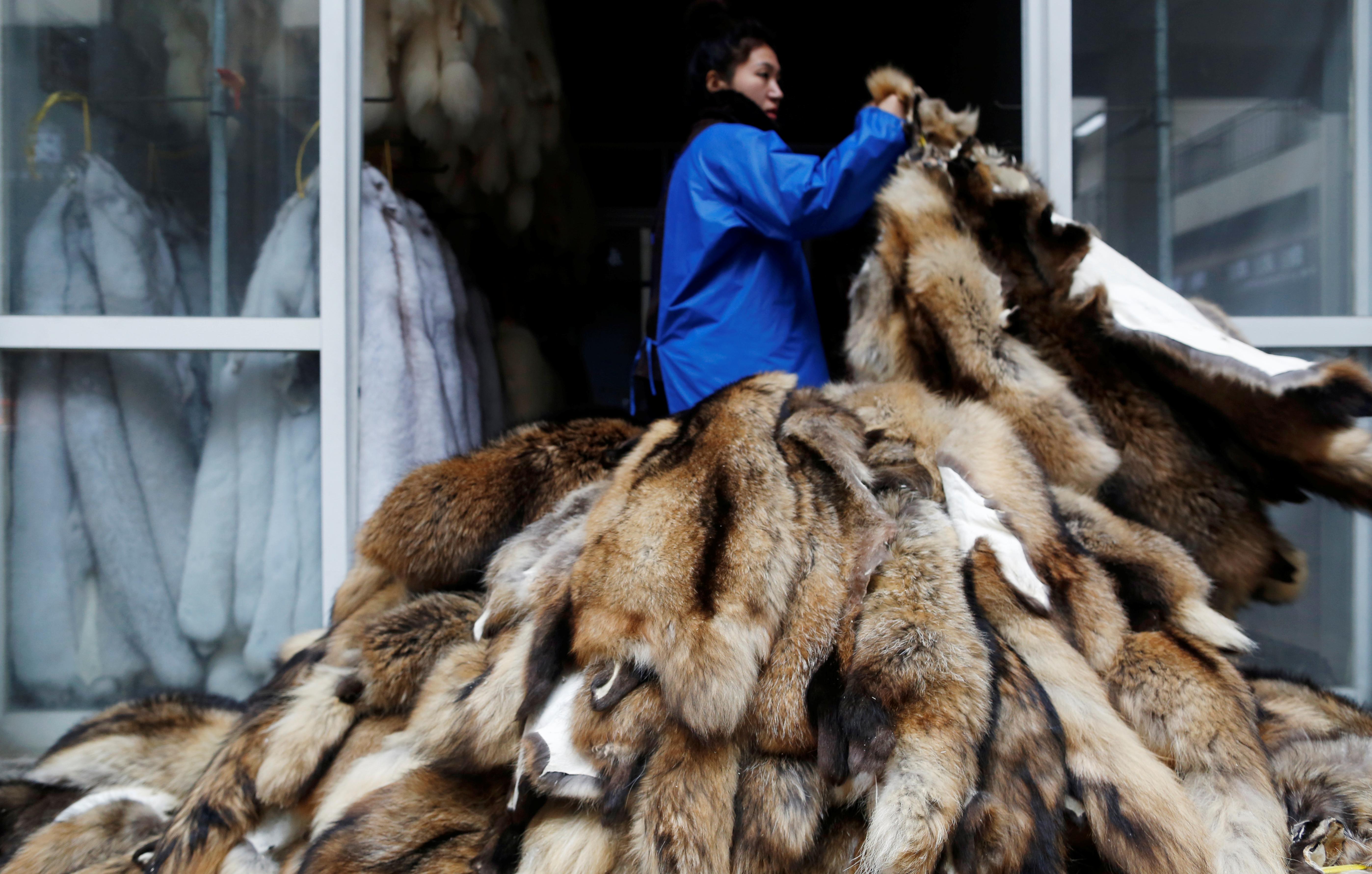 A woman moves raccoon fur pelts outdoor at a fur market in Chongfu, Zhejiang province, China December 14, 2017. REUTERS/William Hong.