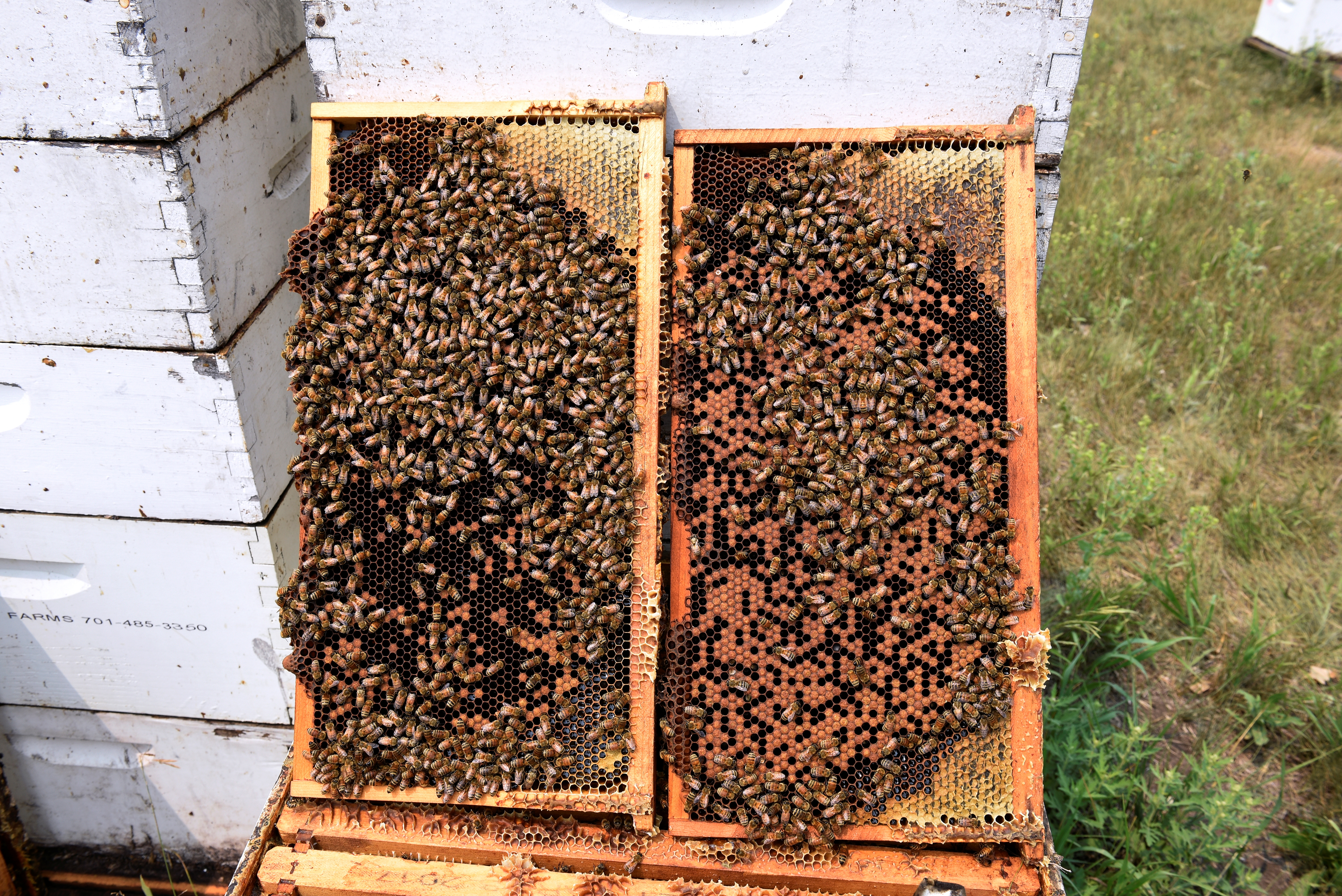 Bee hives showing a lack of honey production at Miller Honey Farms in Gackle, North Dakota, U.S., July 30, 2021. Drought-weakened bee colonies are producing a small honey crop in North Dakota, a major U.S. honey producer. REUTERS/Dan Koeck