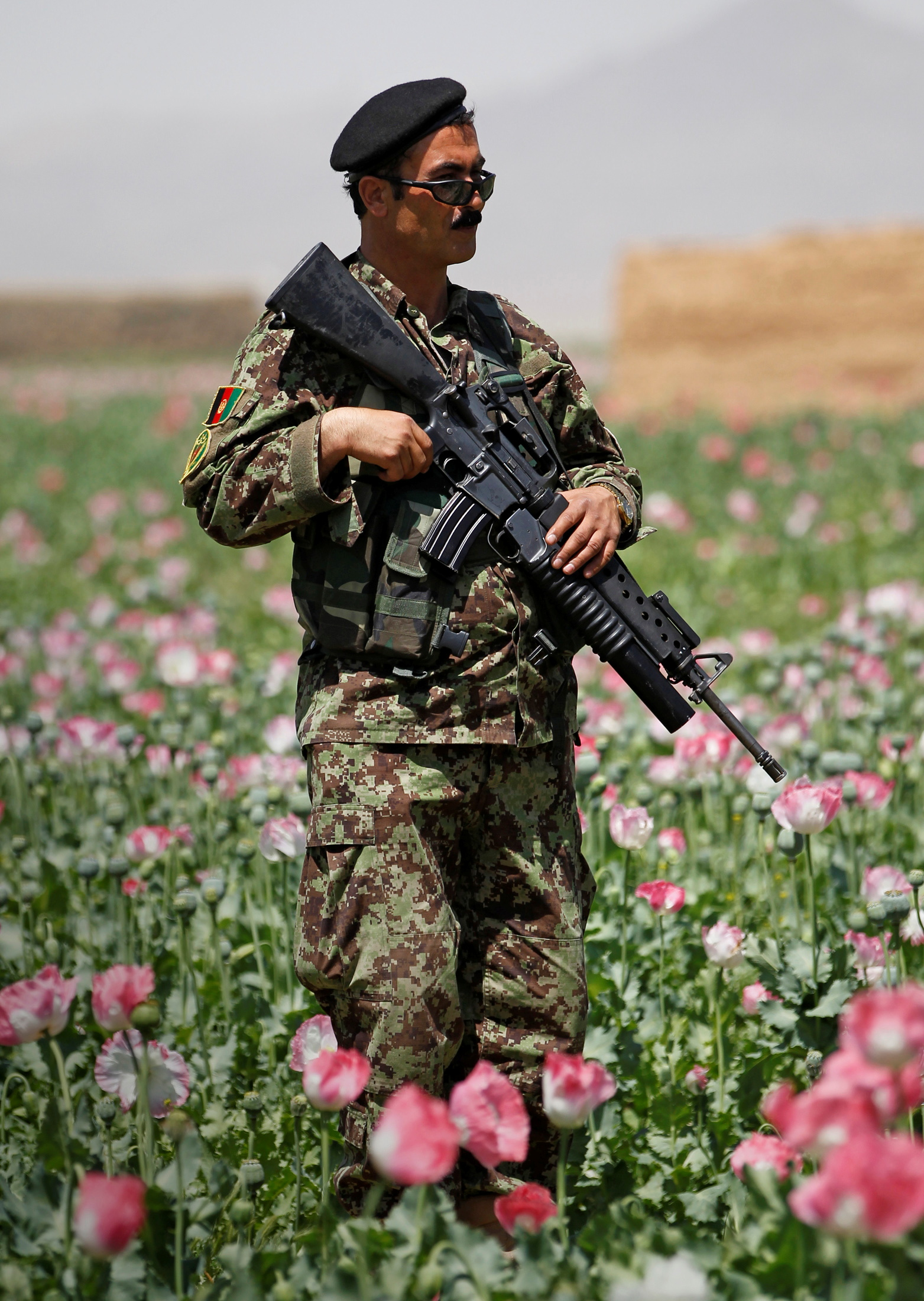 An Afghan National Army soldier stands in a poppy field during a patrol through the village of Jelawar in the Arghandab Valley north of Kandahar April 18, 2011.  REUTERS/Bob Strong/File Photo