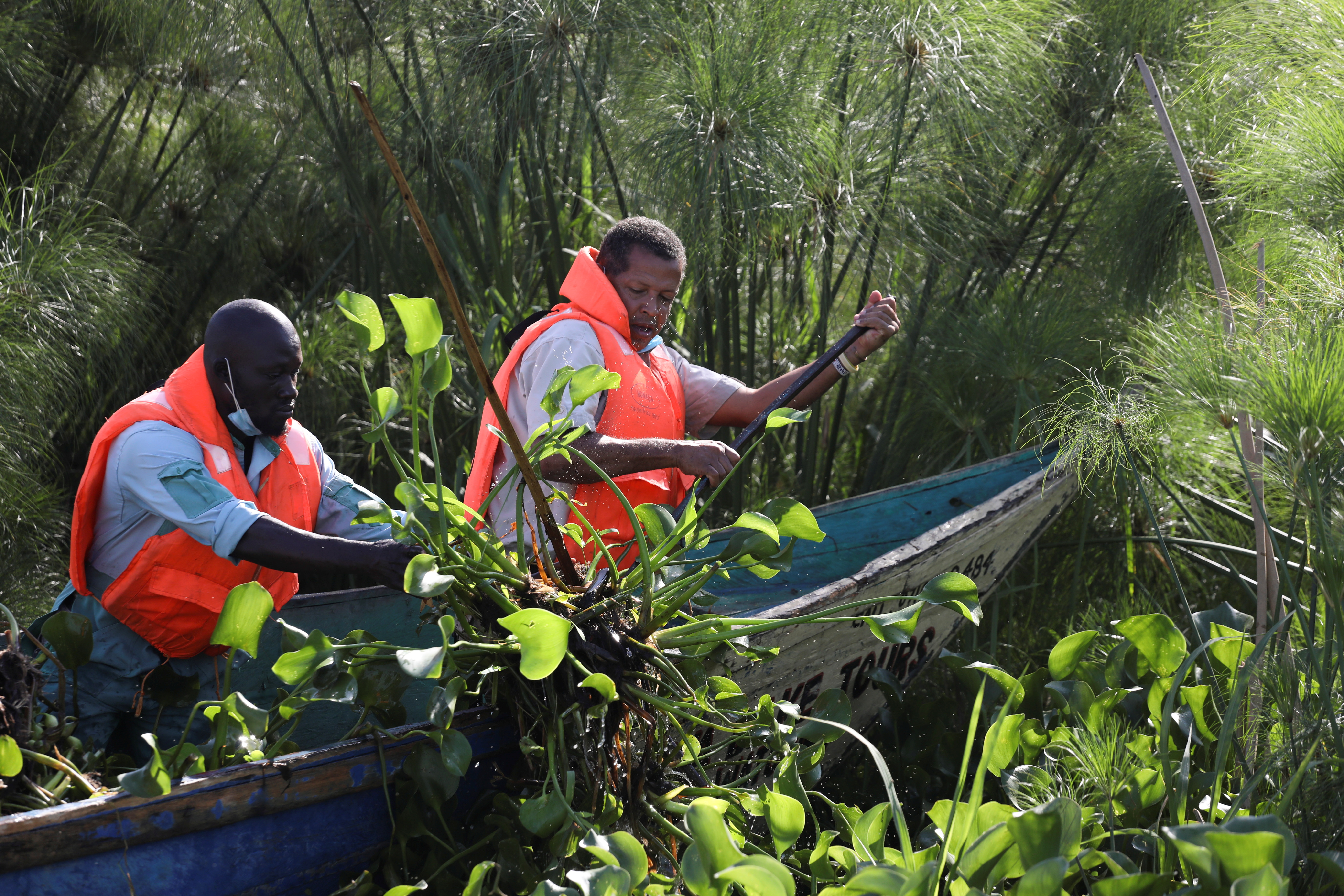 Entrepreneur Dominic Kahumbu and his worker use a boat to harvest water hyacinth to be converted into biogas, on Lake Victoria, near the town of Kisumu, Kenya June 9, 2021. REUTERS/Baz Ratner
