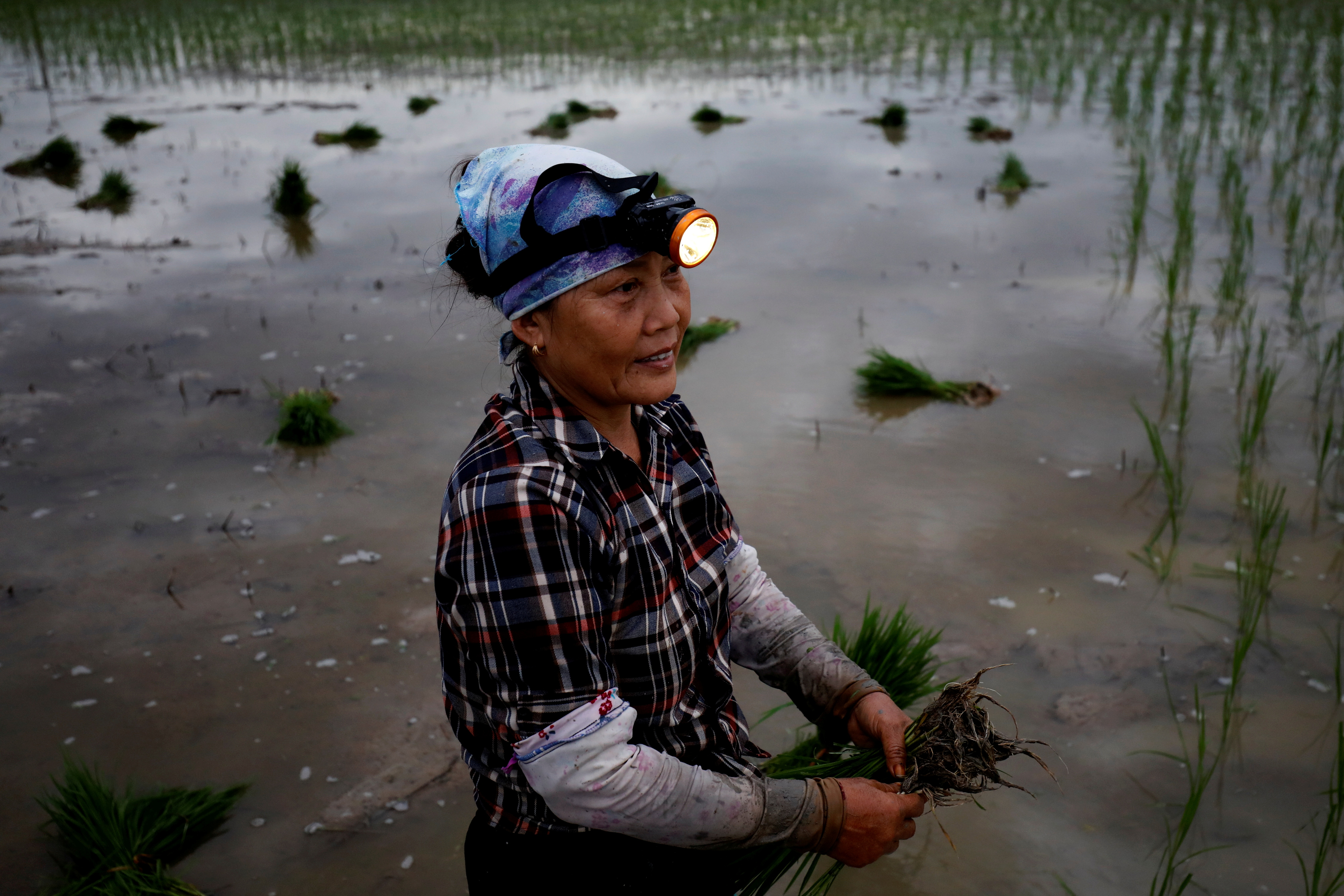A farmer plants rice on a paddy field during early morning to avoid the heat in Hanoi, Vietnam June 25, 2020. REUTERS/Kham/File Photo