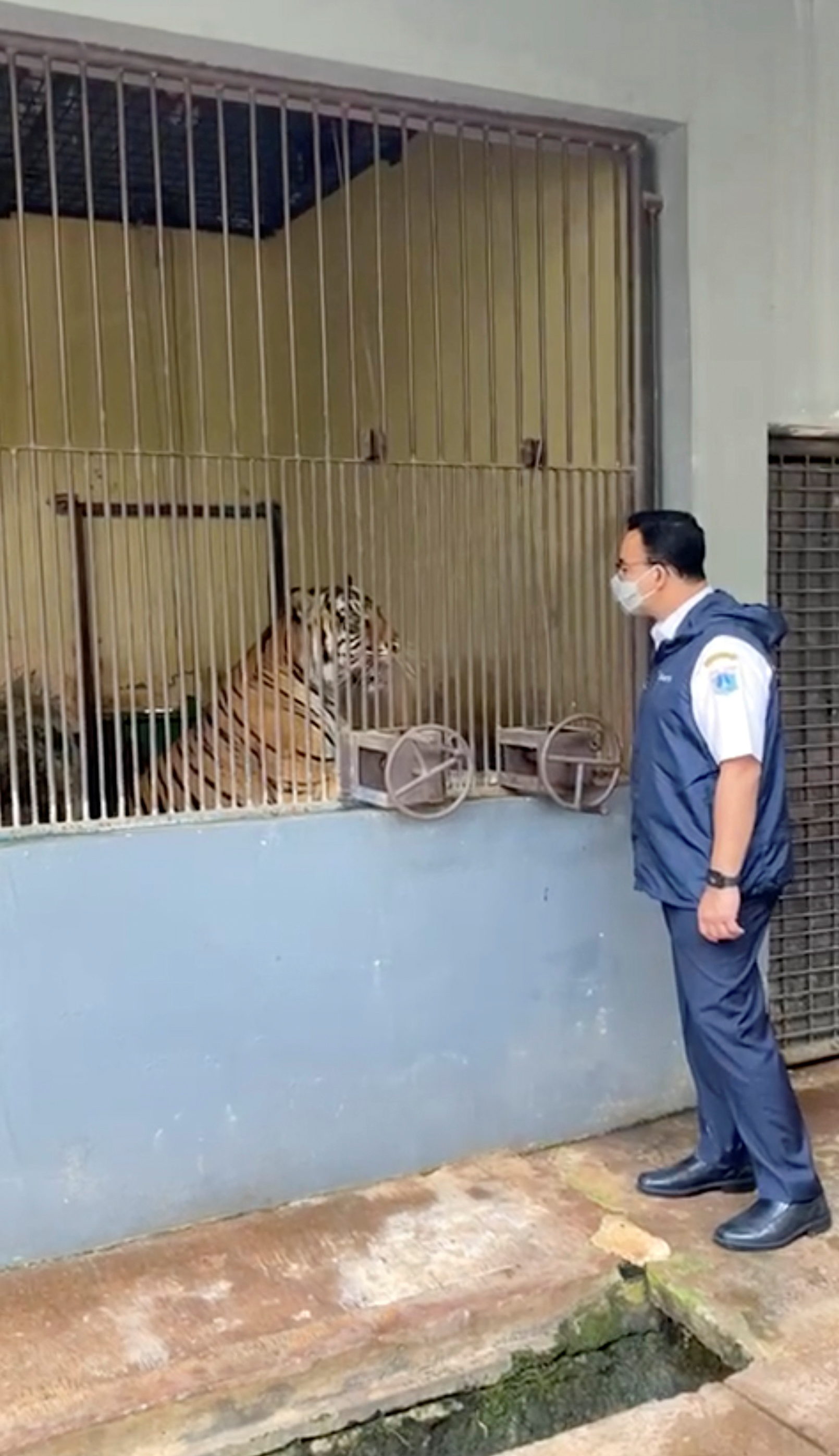 Jakarta Governor Anies Baswedan meets Tino, one of the two Sumatran tigers that recovered from COVID-19, at Ragunan Zoo in Jakarta, Indonesia July 31, 2021 in this still image taken from social media video recorded July 31, 2021.  Jakarta Capital City Government/via REUTERS
