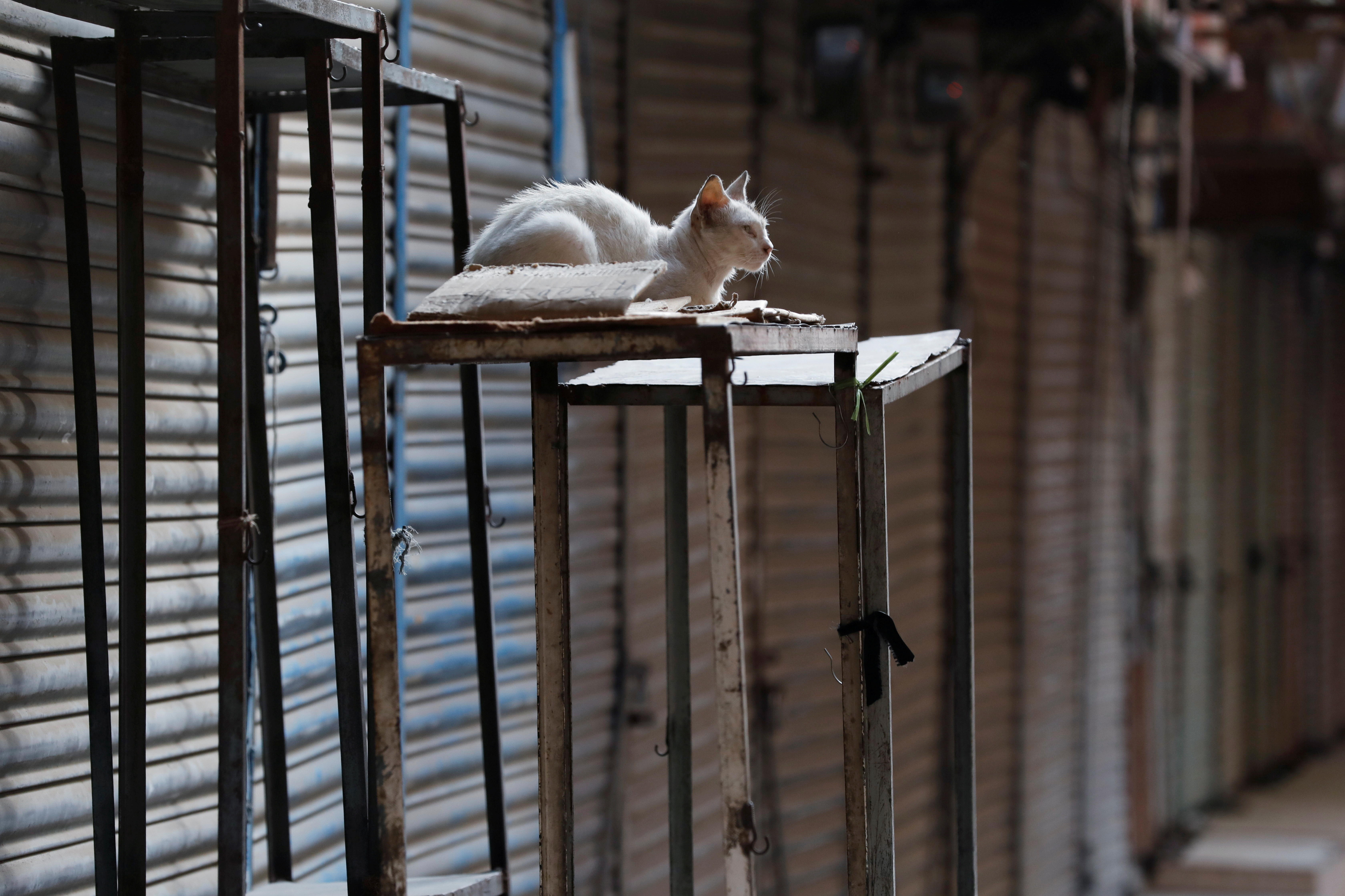A cat is seen at a closed market during a contrywide strike by the banned Islamist political party Tehrik-e-Labaik Pakistan (TLP) in Karachi, Pakistan April 19, 2021.REUTERS/Akhtar Soomro