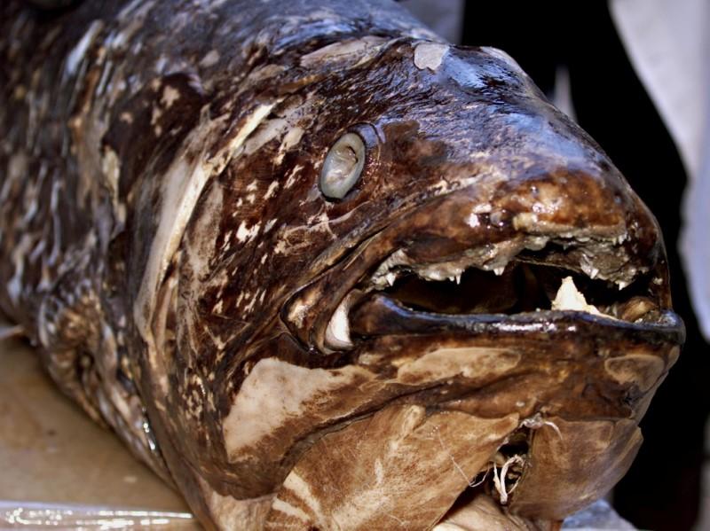 Staff of department of fish studies at the National Museum of Kenya on Nov. 19, 2001, display a coelacanth fish weighing 77 kilograms and measuring 1.7 metres caught by Kenyan fishermen at the coastal town of Malindi in April 2001. REUTERS/George Mulala/File Photo