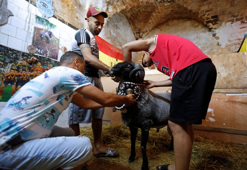Mourad, the owner of the ram 2Pac, accompanied by his friends, prepare 2Pac before ram fighting in Bab Souika district, near the Old City of Tunis, Tunisia June 13, 2021. Picture taken June 13, 2021. REUTERS/Zoubeir Souissi