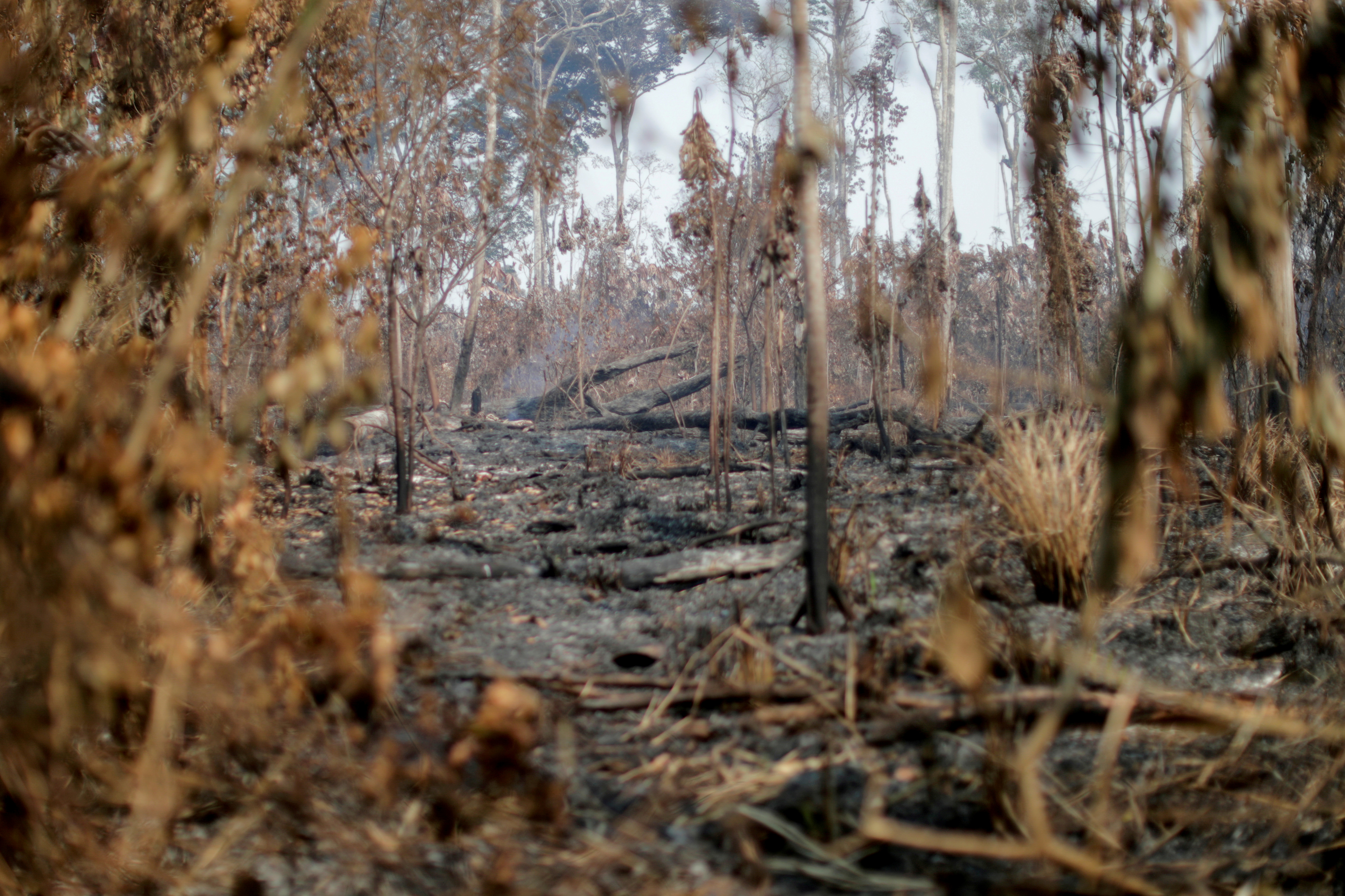 A burning tract of the Amazon jungle is seen near Apui, Amazonas State, Brazil, August 11, 2020. REUTERS/Ueslei Marcelino
