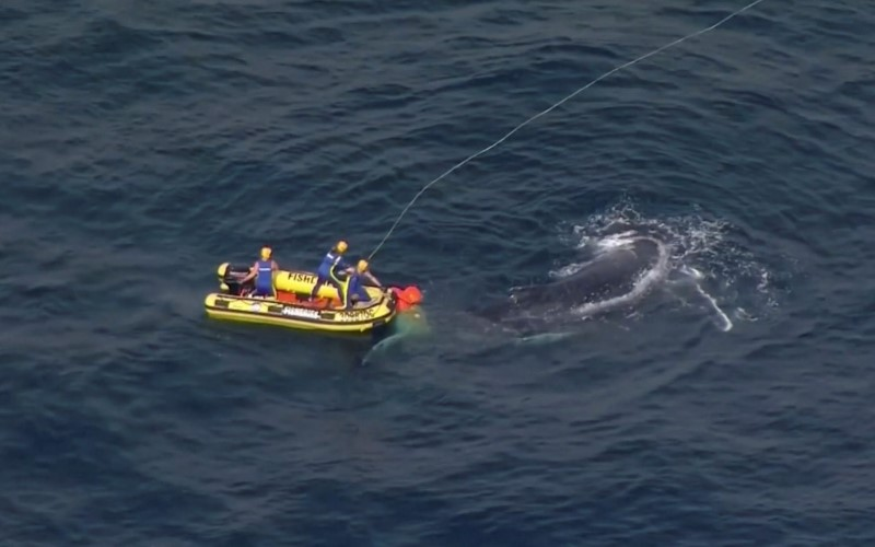 Australian marine rescuers work to free a whale tangled in shark nets off Queensland's Gold Coast, Australia August 11, 2021, in this screen grab taken from a video. Picture taken August 11, 2021. Nine Network/ via REUTERS