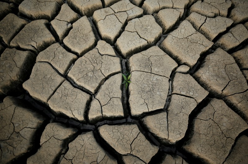 A plant grows between cracked mud in a normally submerged area at Theewaterskloof dam near Cape Town, South Africa, January 21, 2018. The dam, which supplies most of Cape Town's potable water, is currently dangerously low as the city faces