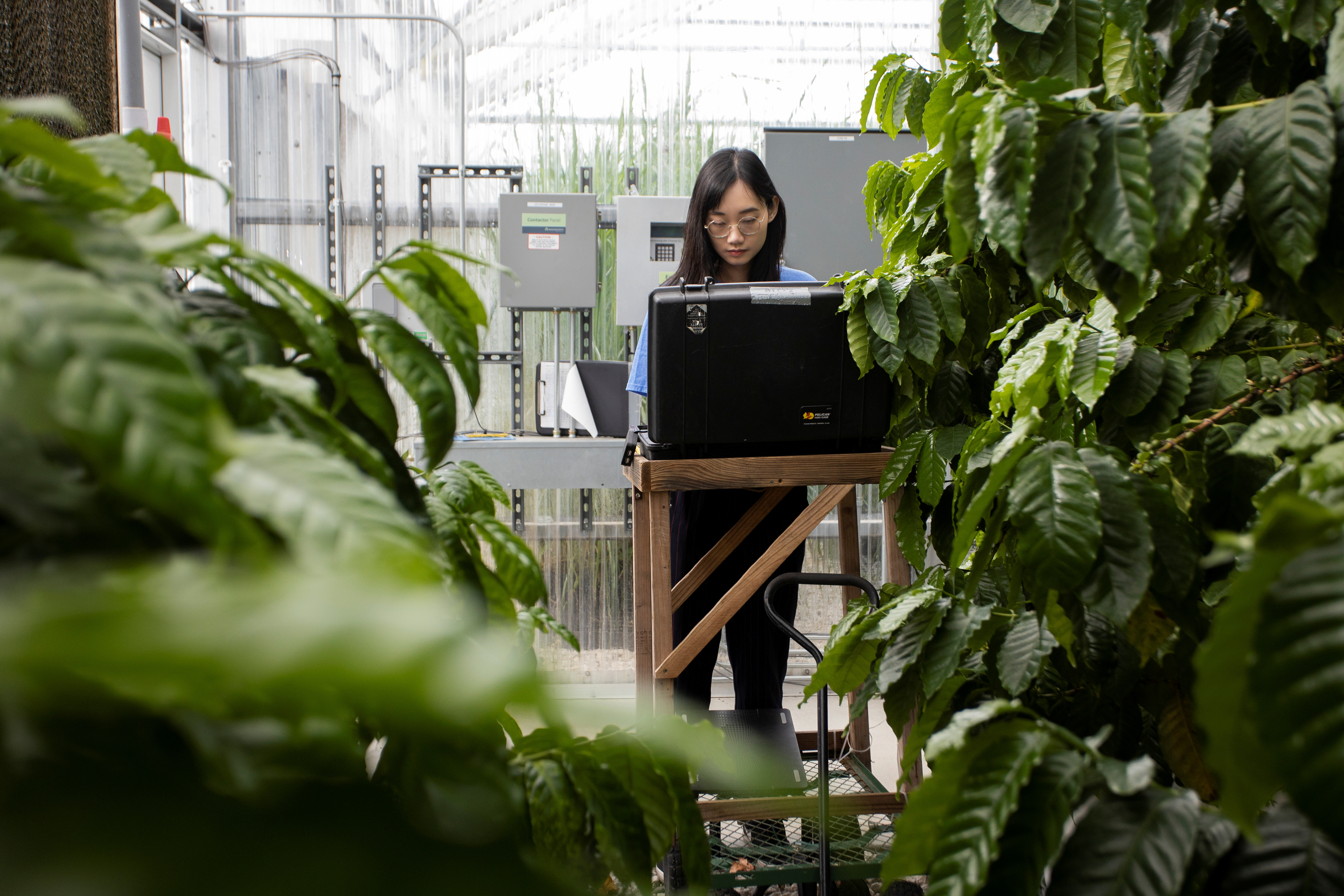 Xiaolei Guo utilises artificial intelligence image analysis software to examine greenhouse coffee tree roots in this picture obtained by Reuters on September 20, 2021. UF/IFAS photo by Tyler Jones/Handout via REUTERS