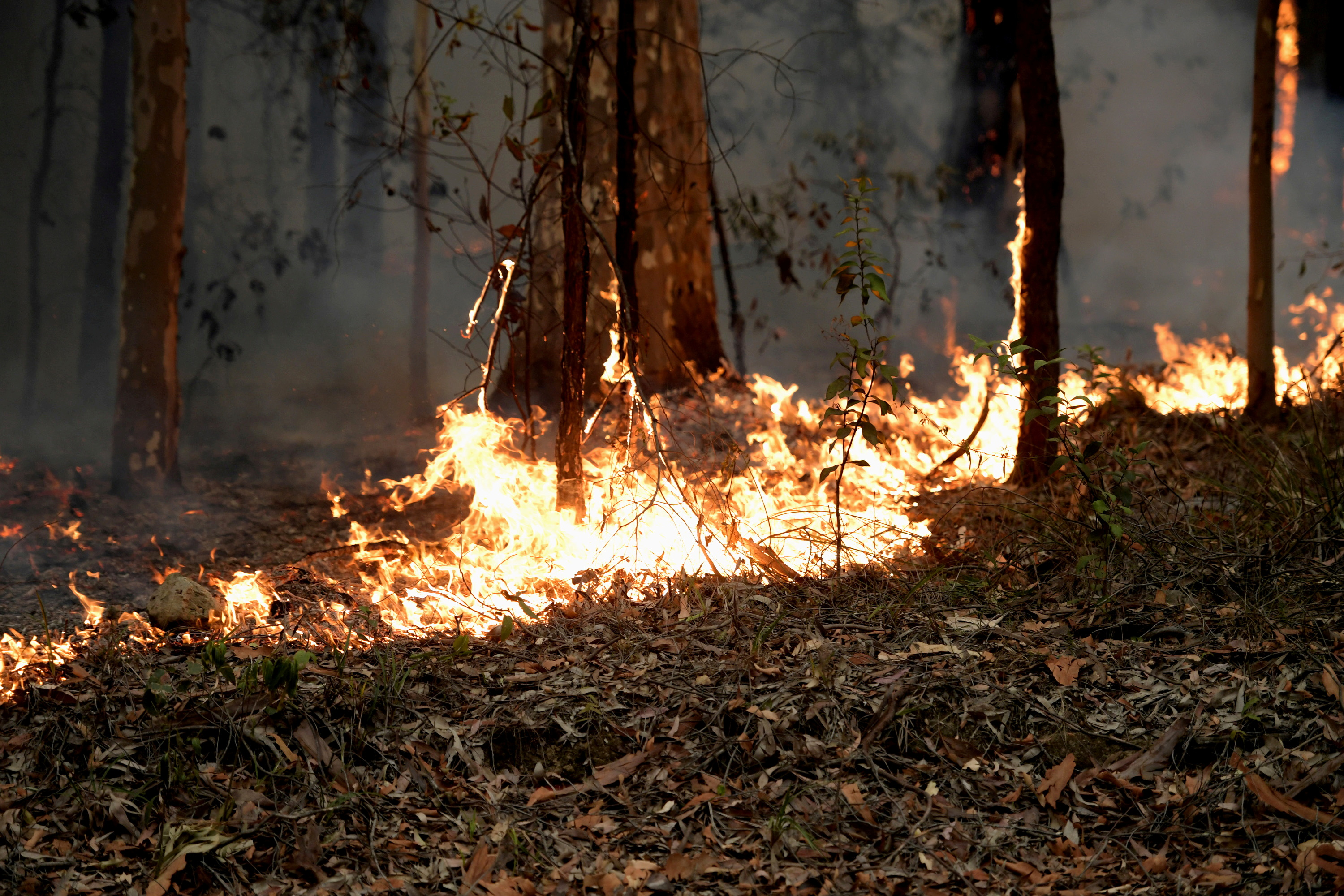 Small fires along the eastern edge of the Currowan fire still burn on the Princes Highway near in Milton, Australia January 5, 2020. REUTERS/Tracey Nearmy