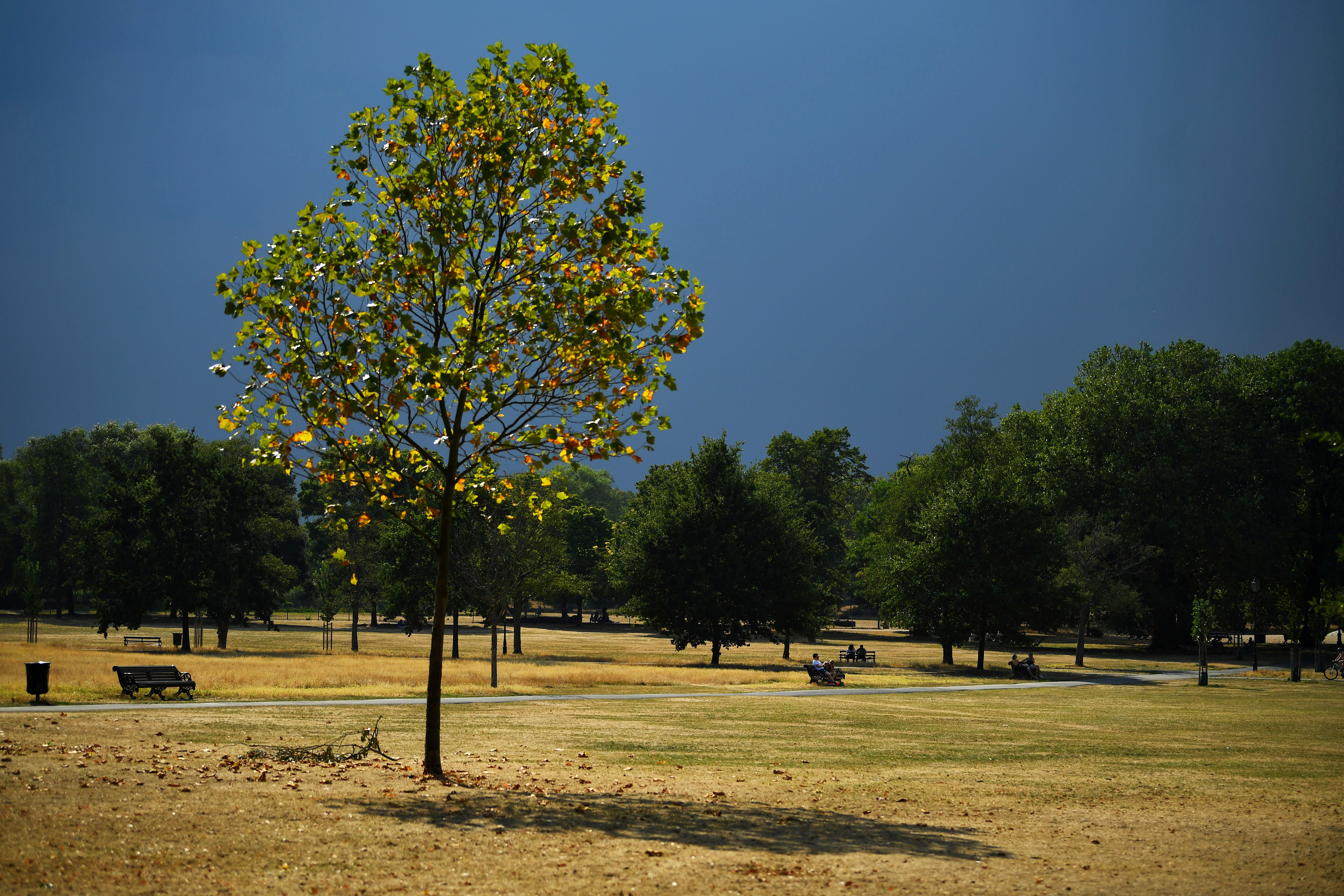 A tree is seen in a sun-dried and parched Clapham Common, during hot weather, amid the coronavirus (COVID-19) outbreak, in London, Britain August 12, 2020. REUTERS/Dylan Martinez/File Photo