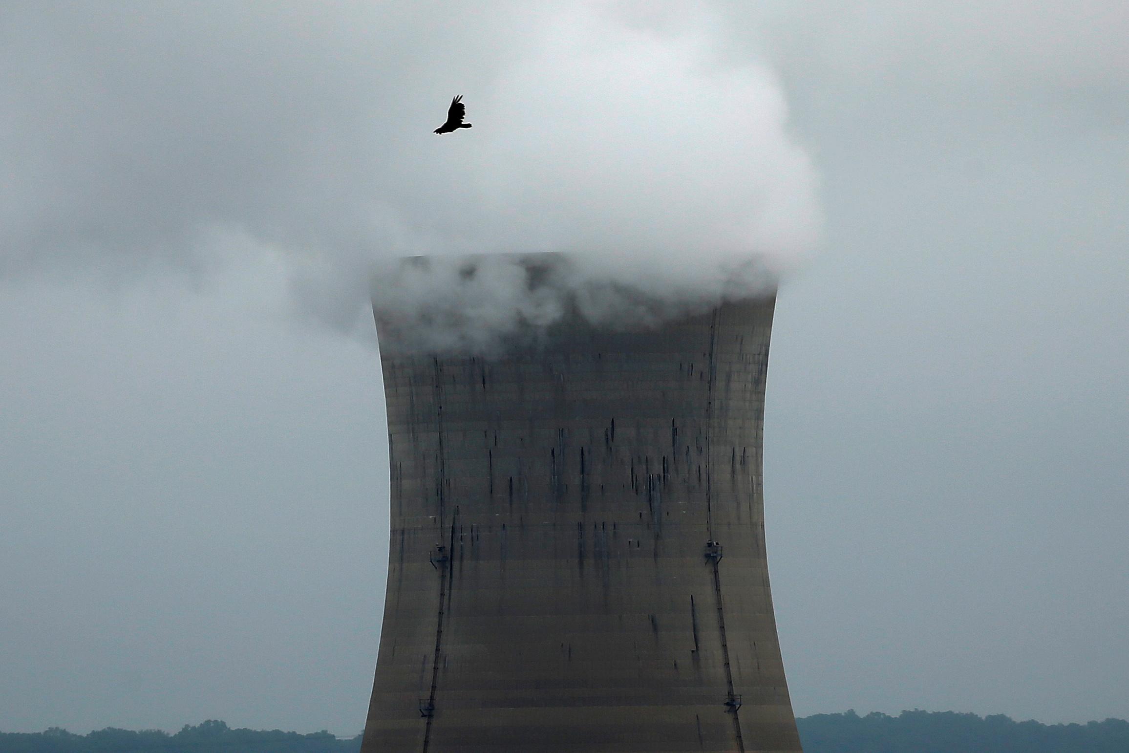 A bird flies over the Three Mile Island Nuclear power plant in Goldsboro, Pennsylvania, U.S. May 30, 2017.   REUTERS/Carlo Allegri/File Photo