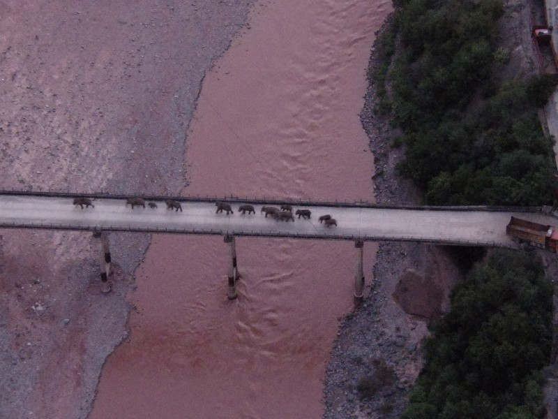 An aerial view shows a herd of wild Asian elephants crossing the Yuanjiang River in Yuanjiang county of Yuxi, Yunnan province, China August 8, 2021. The herd of 14 wild Asian elephants is on its way back to its traditional habitat, according to provincial officials. Picture taken with a drone August 8, 2021. China Daily via REUTERS