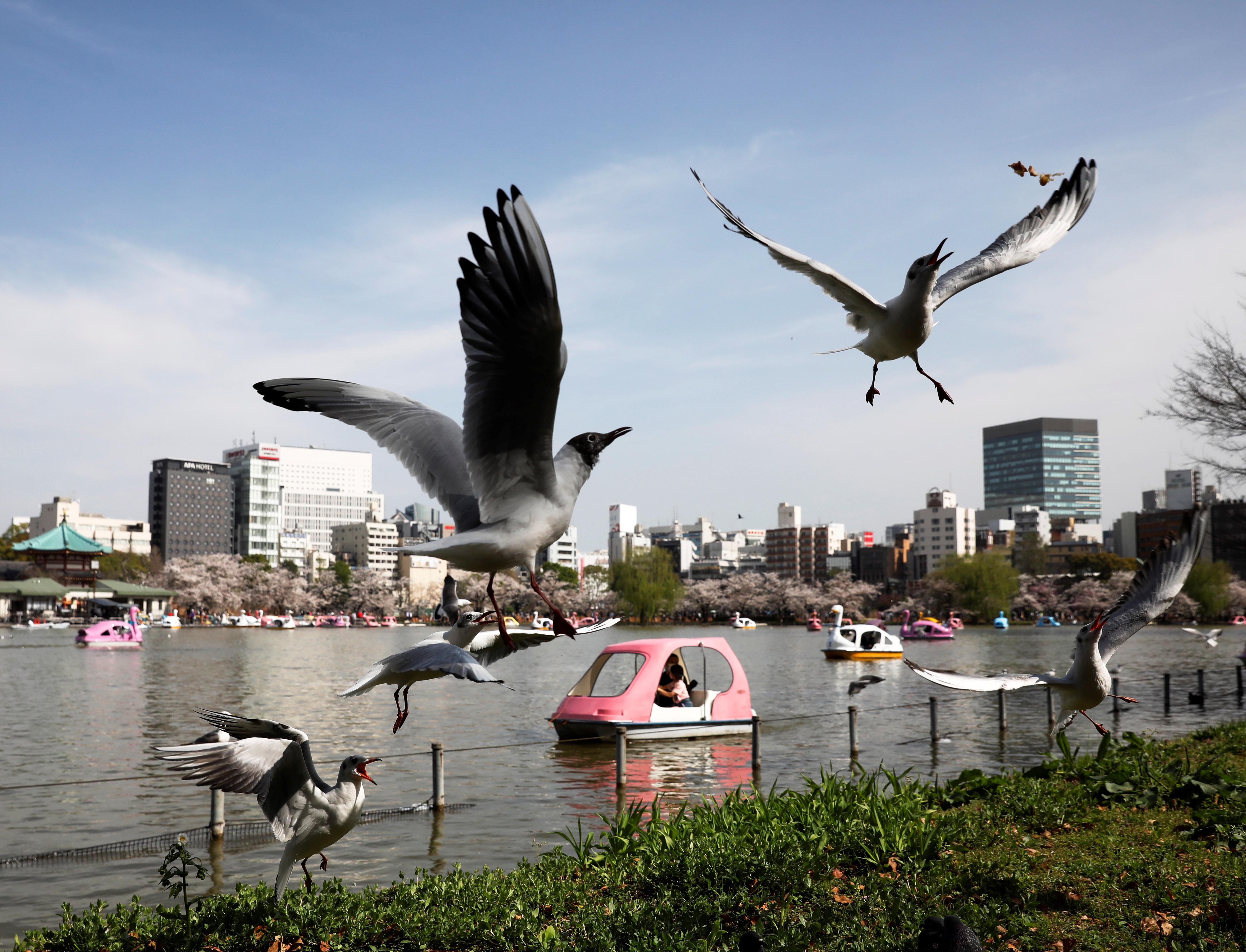 Seagulls fly near Shinobazu Pond in Ueno Park in Tokyo, Japan, March 29, 2021. REUTERS/Kim Kyung-Hoon
