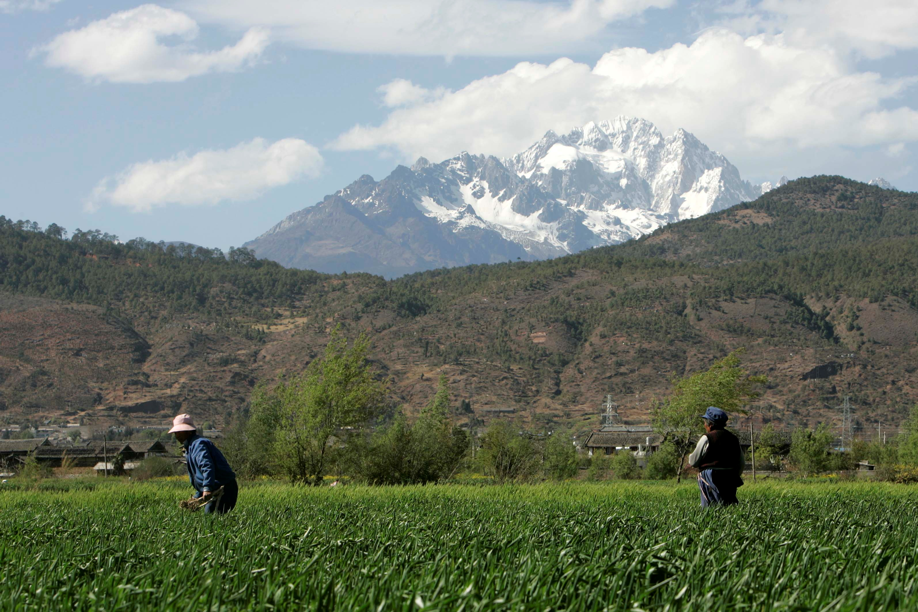 Farmer plough their field in Lijiang, Yunnan Province, April 5, 2008. REUTERS/Aly Song (CHINA)/File Photo